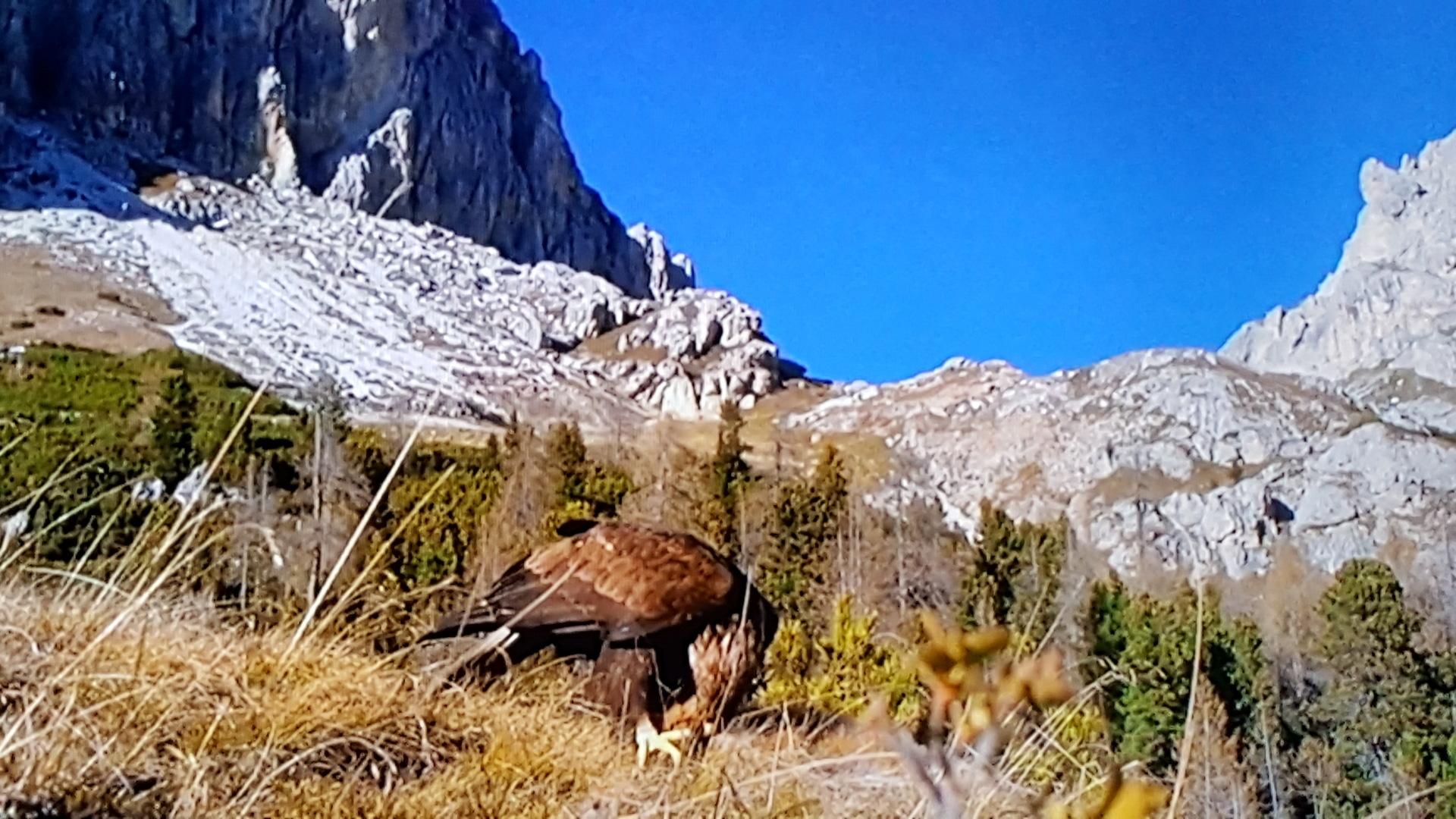 Wild nature | grass, mountain, outdoors, sky