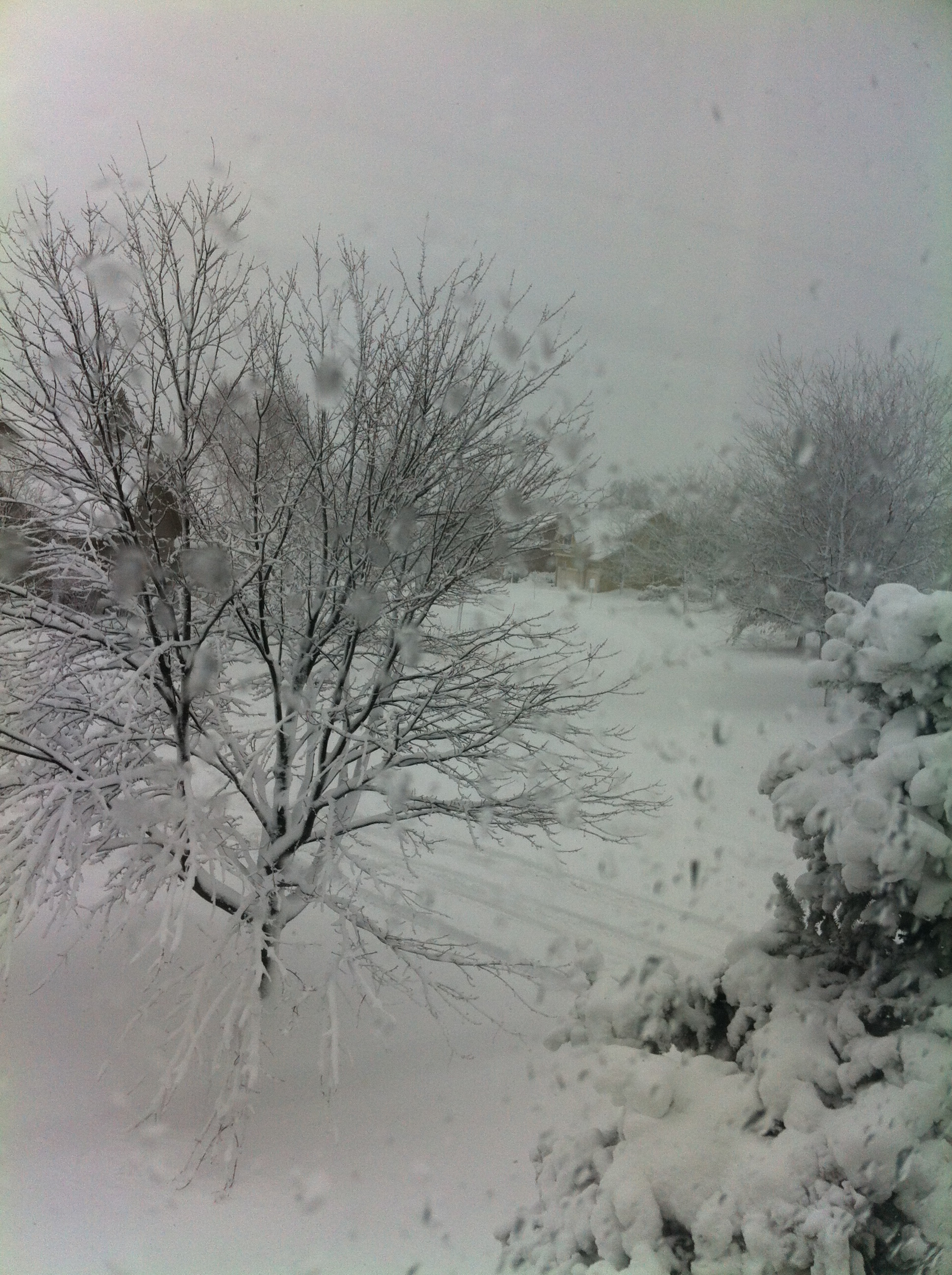 A snapshot of heavy snow outside the window.