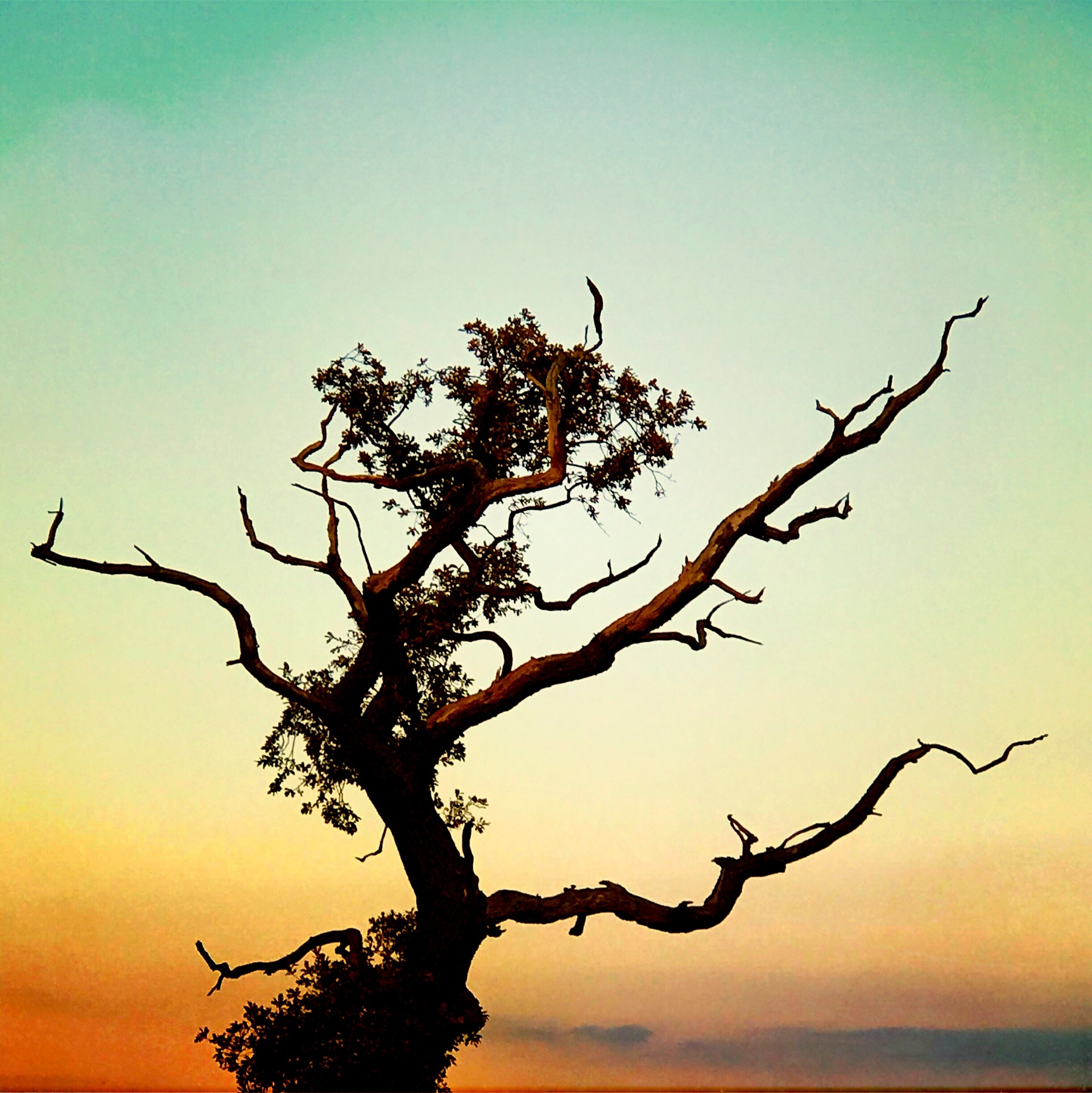 Tree, No Person, Sunset, Nature, Dawn