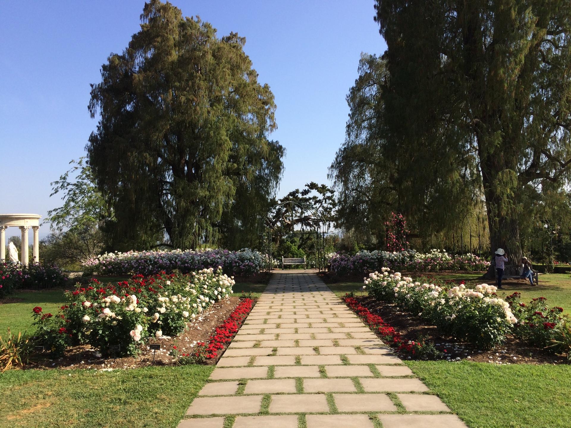 Brick road | bricks, roses, pretty, sylviegirl