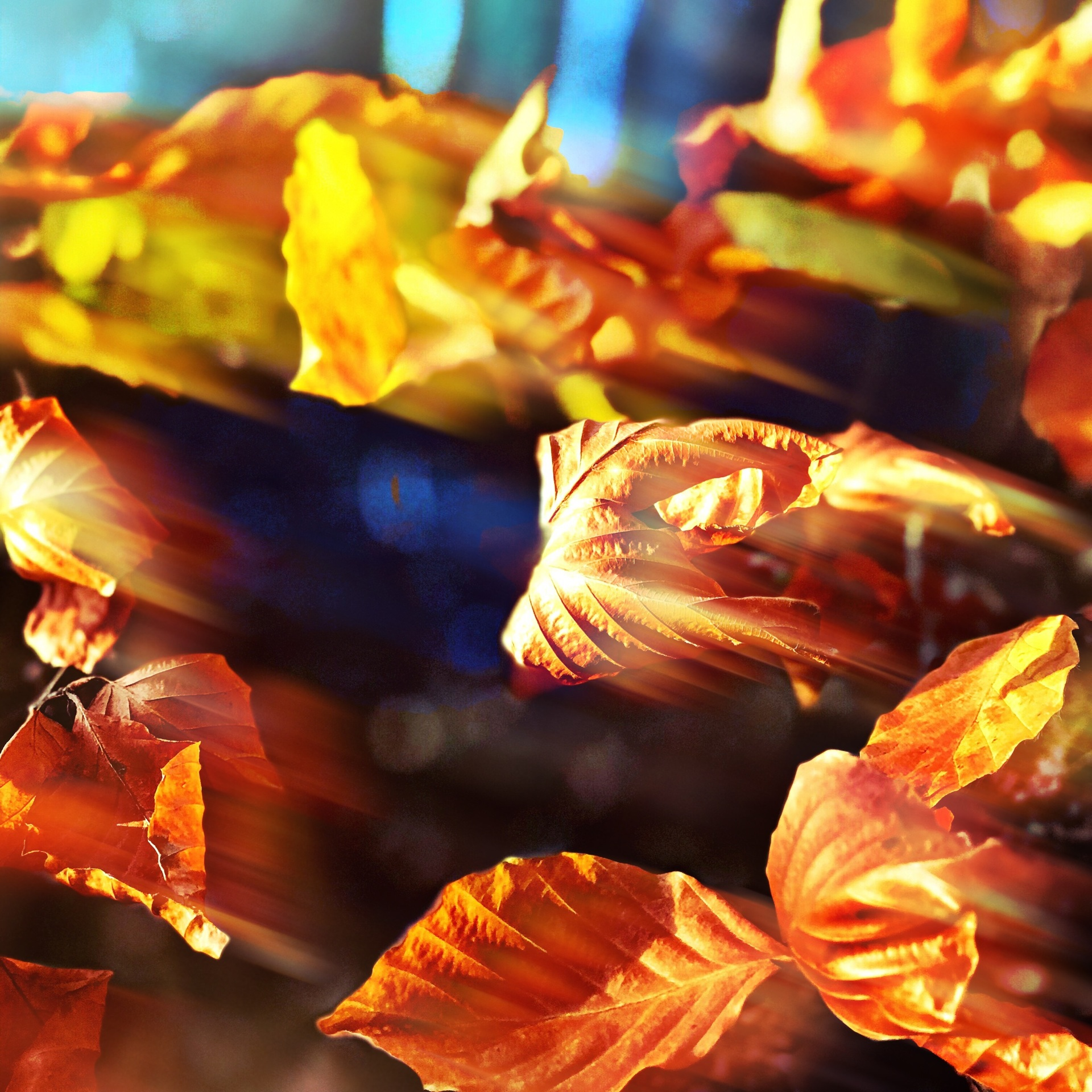 Autumnal leaves | mezmic, no person, fall, bright