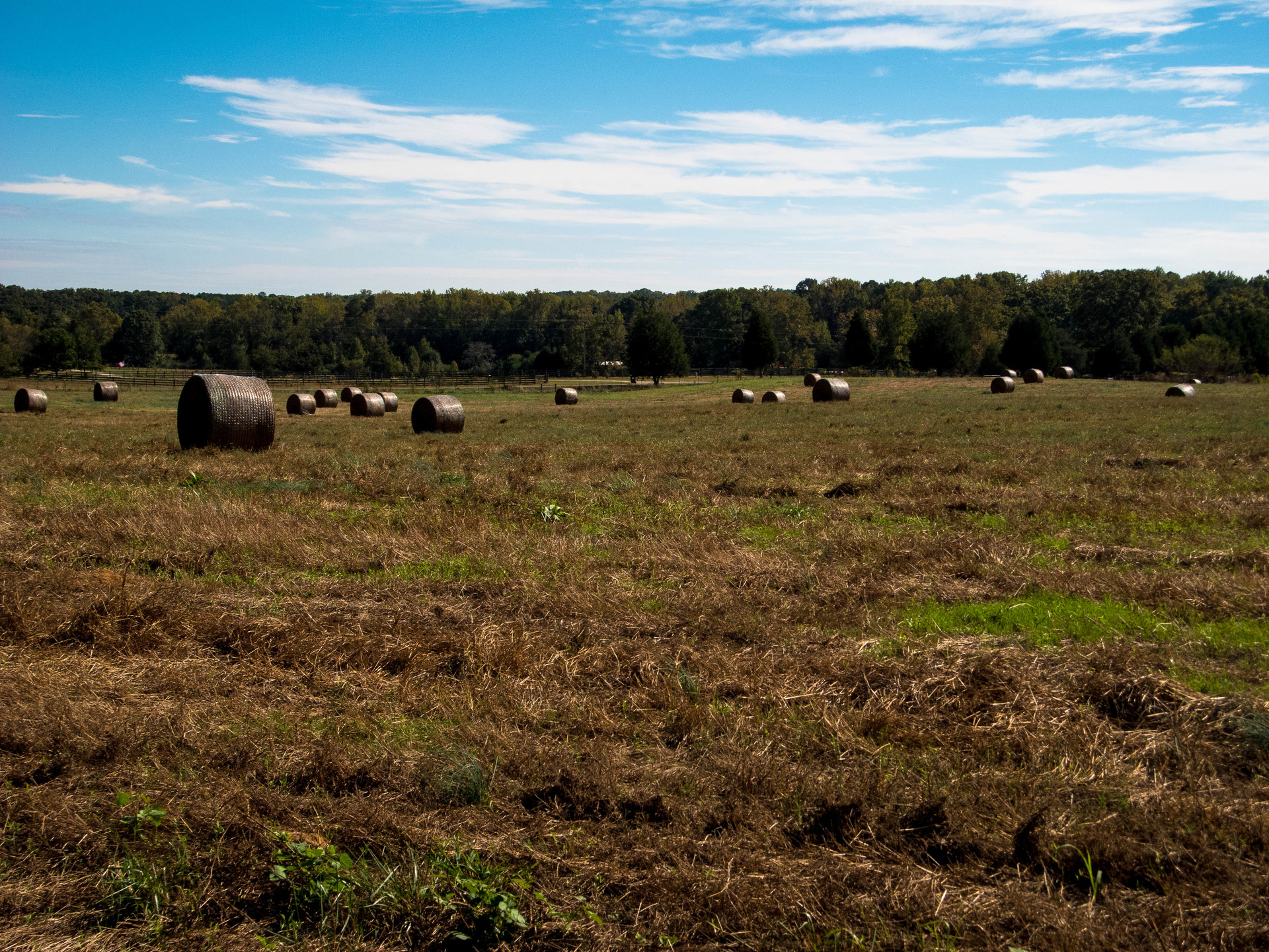 Hayfield | jrcastine, agriculture, cropland, farm