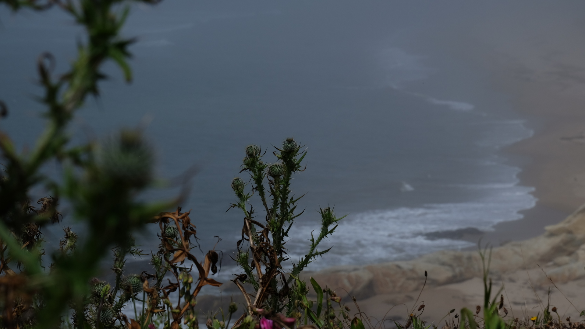 Thistle growing on coast | tschat, thistle, landscape, nature