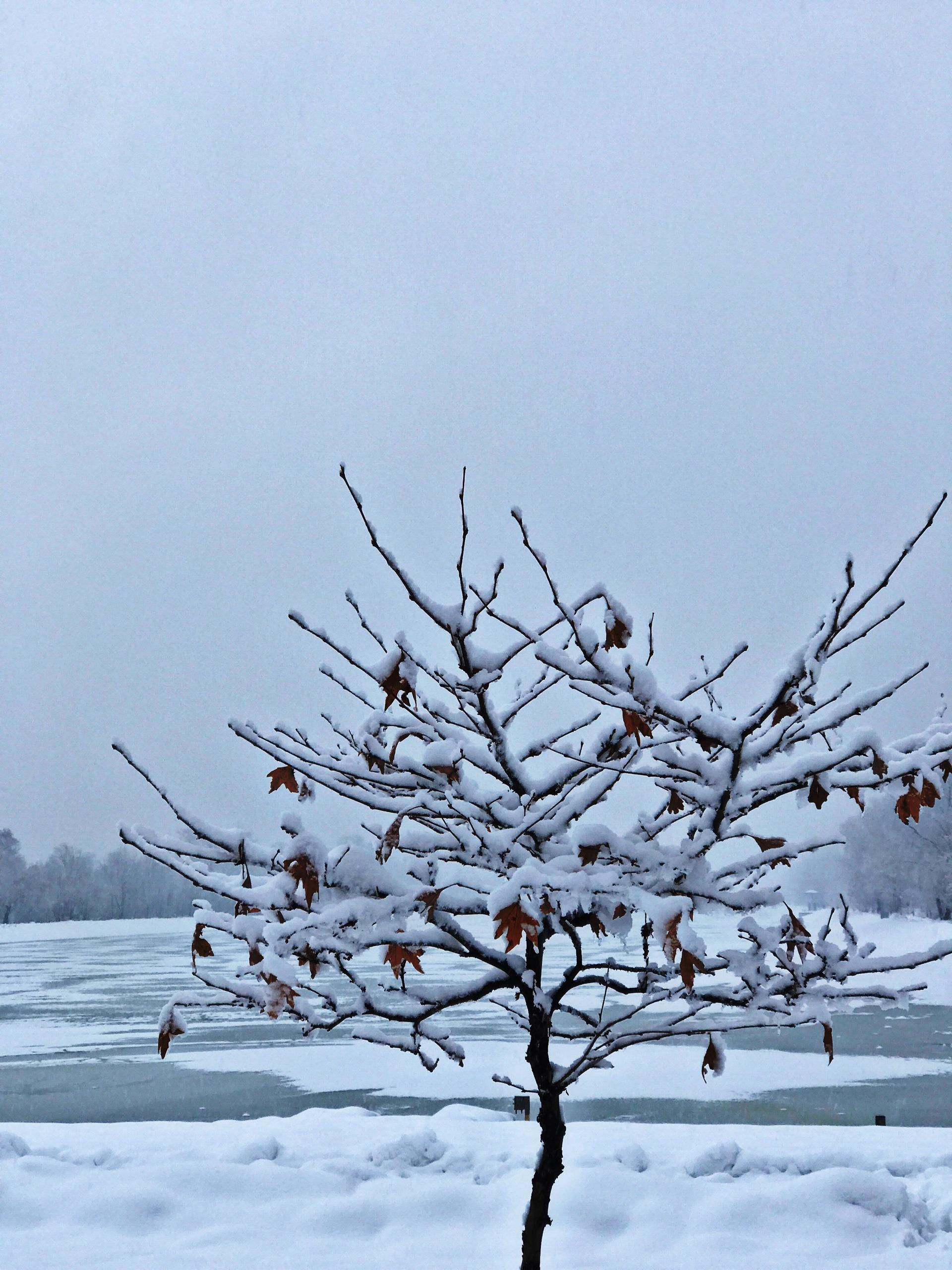 Winter Views..   winter, weather, tree, snow