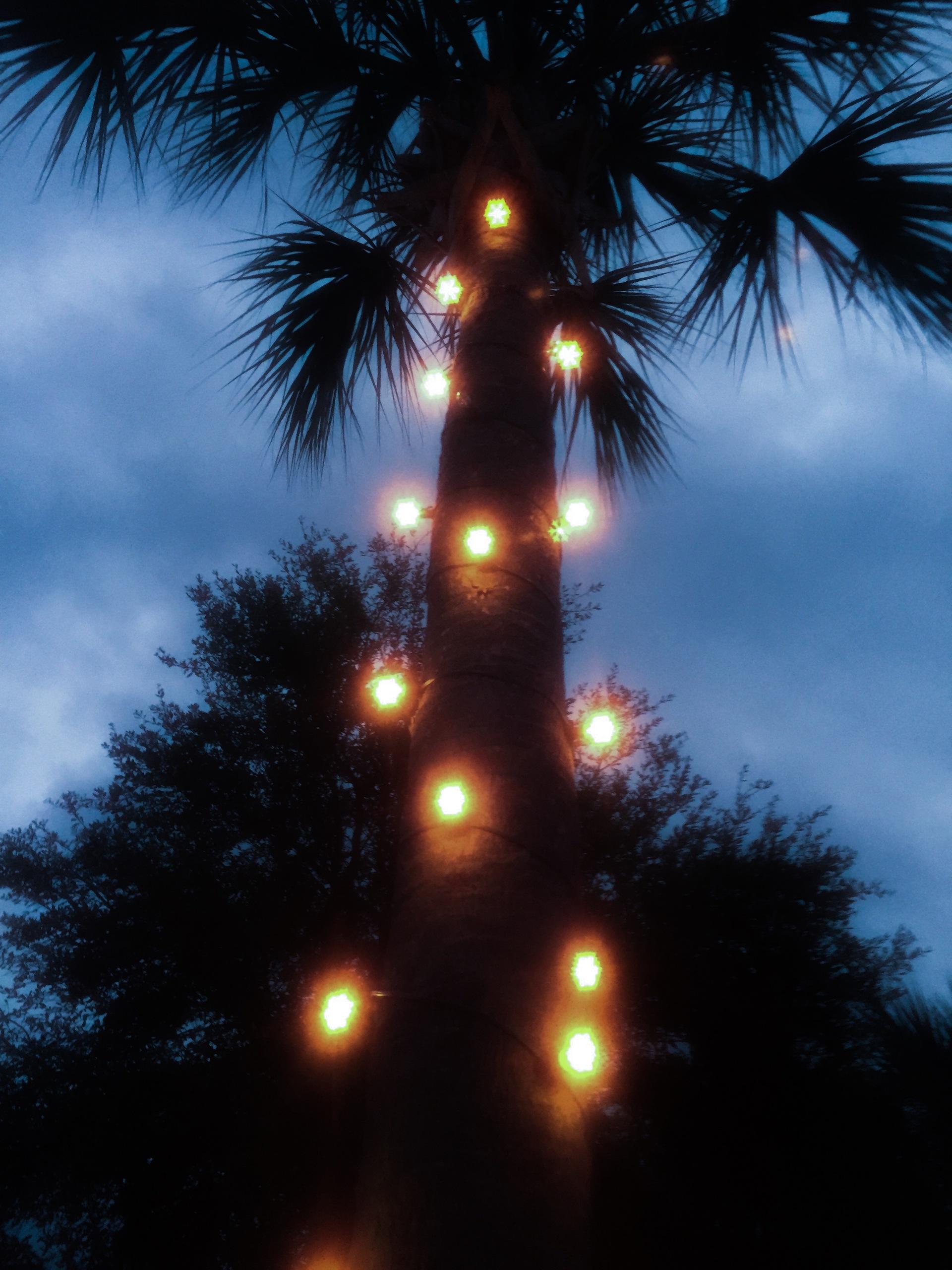 Tree illuminating with light | low, garden, park, decoration