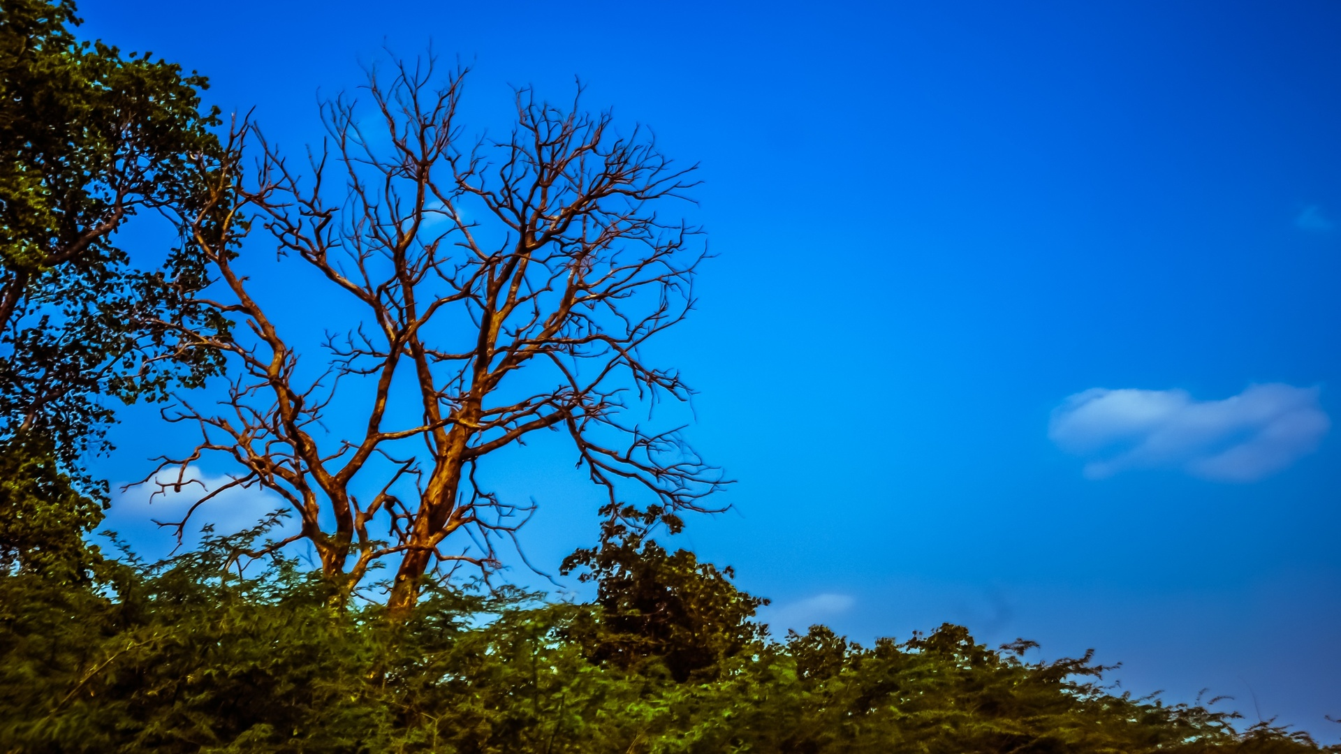 tree | no person, nature, landscape, sky