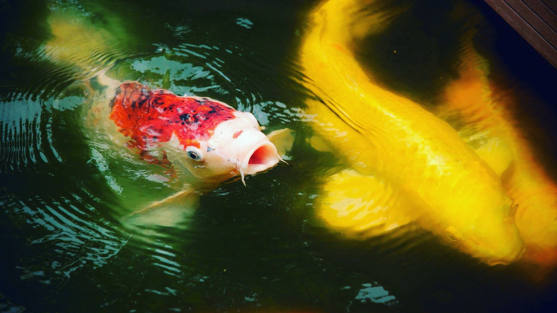 fish | underwater, water, swimming, no person