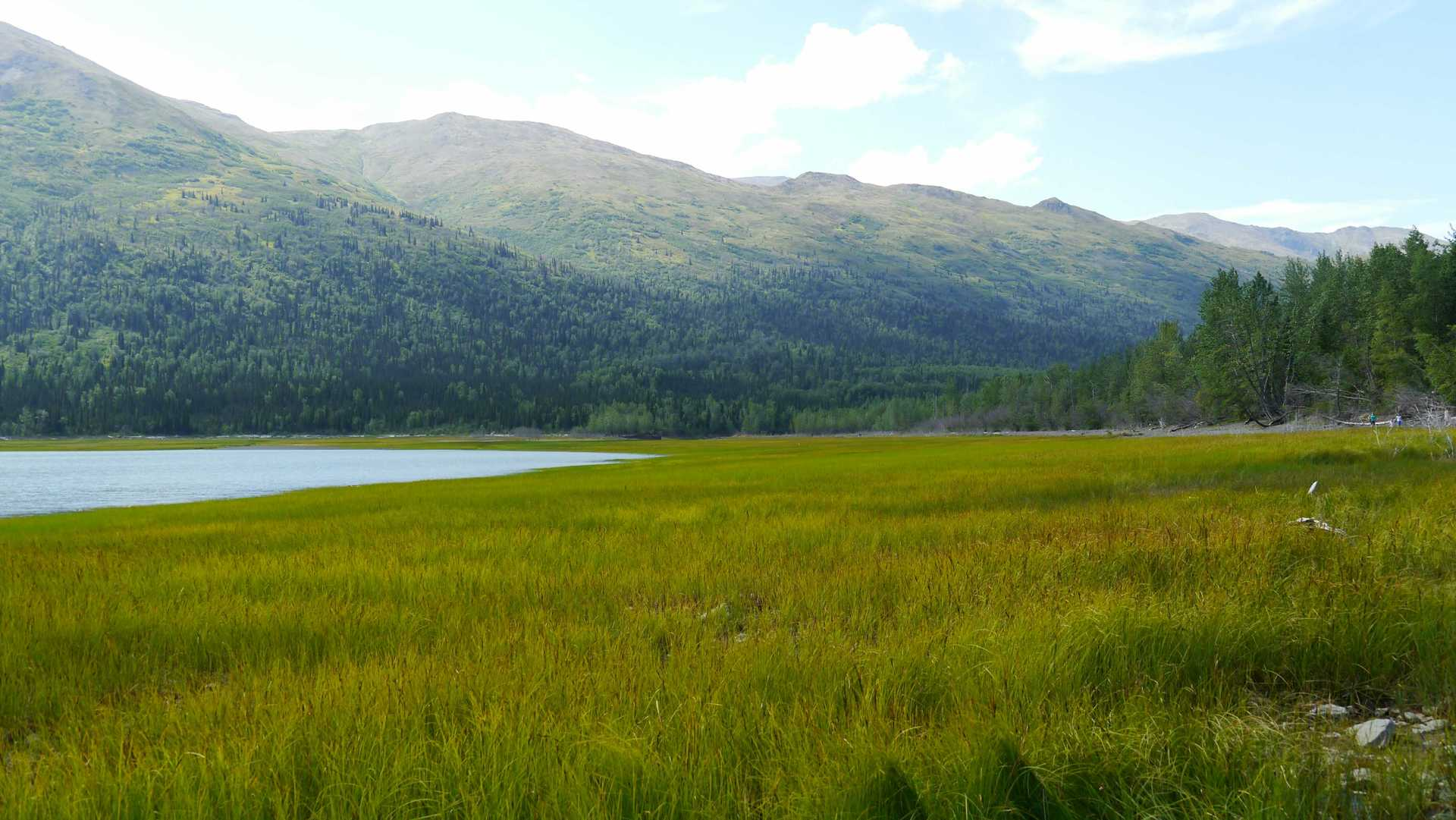 Eklunta Lake (Anchorage), Alaska | elise81, grassland, grass, landscape