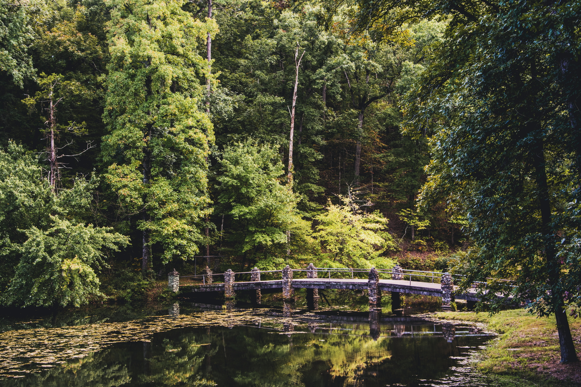 Bridge and pond  | leahbiernacki, fall, nature, Autumn