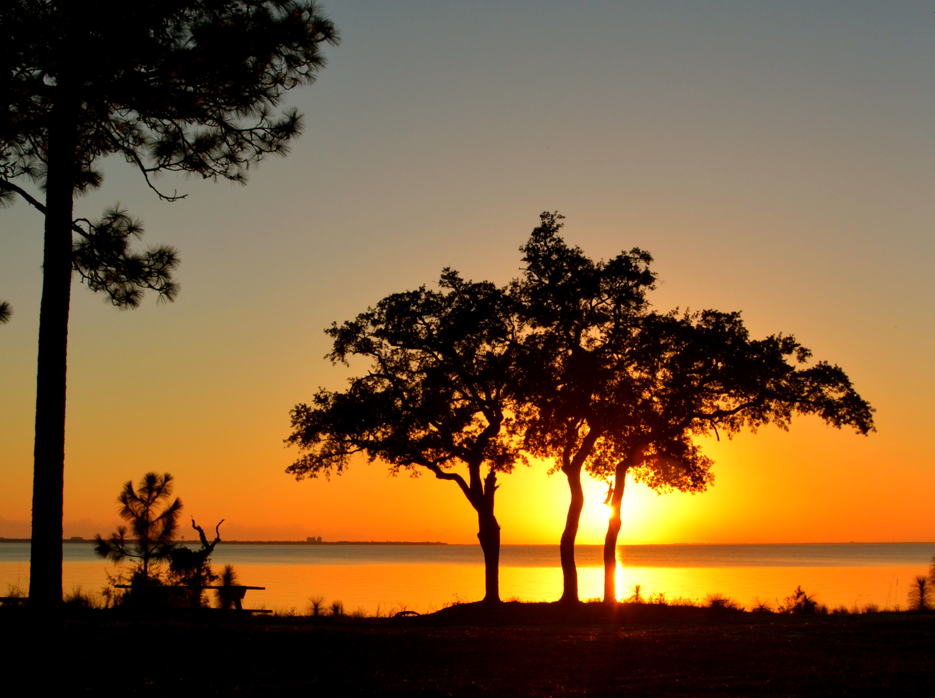 Silhouette of tree on lakeshore