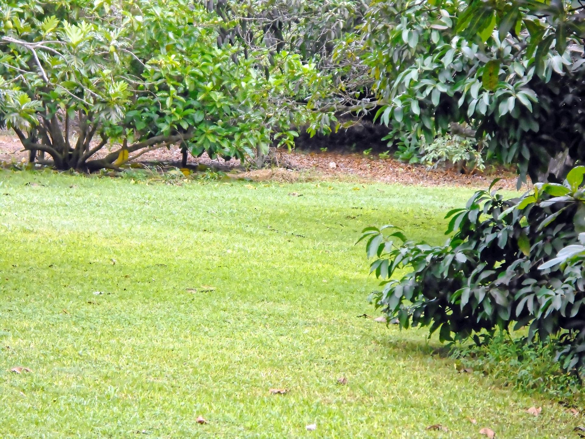 Lawn | jacquelin, tree, landscape, grass