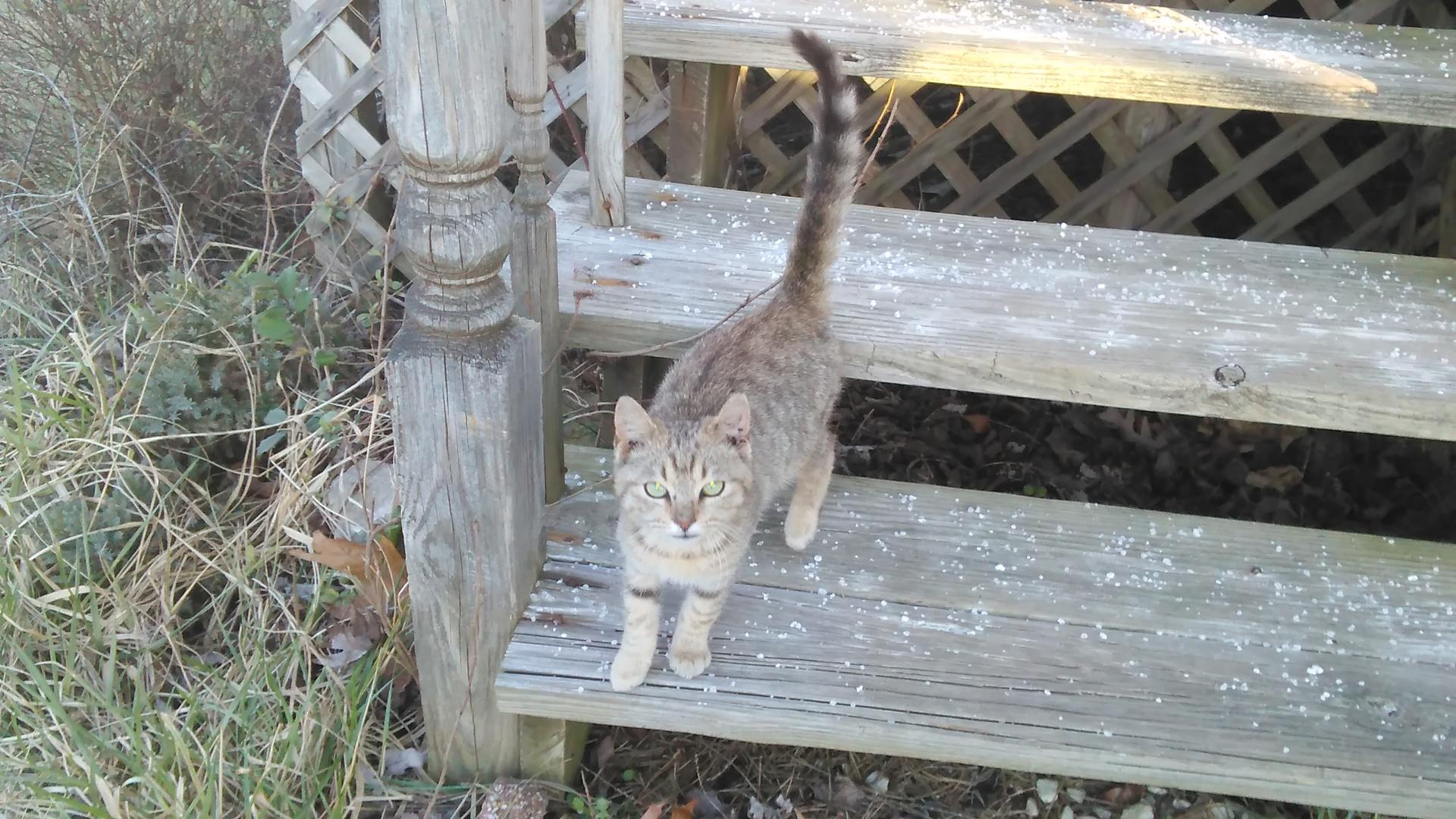 Young stray cat   codenamesailorearth, animal, cute, mammal