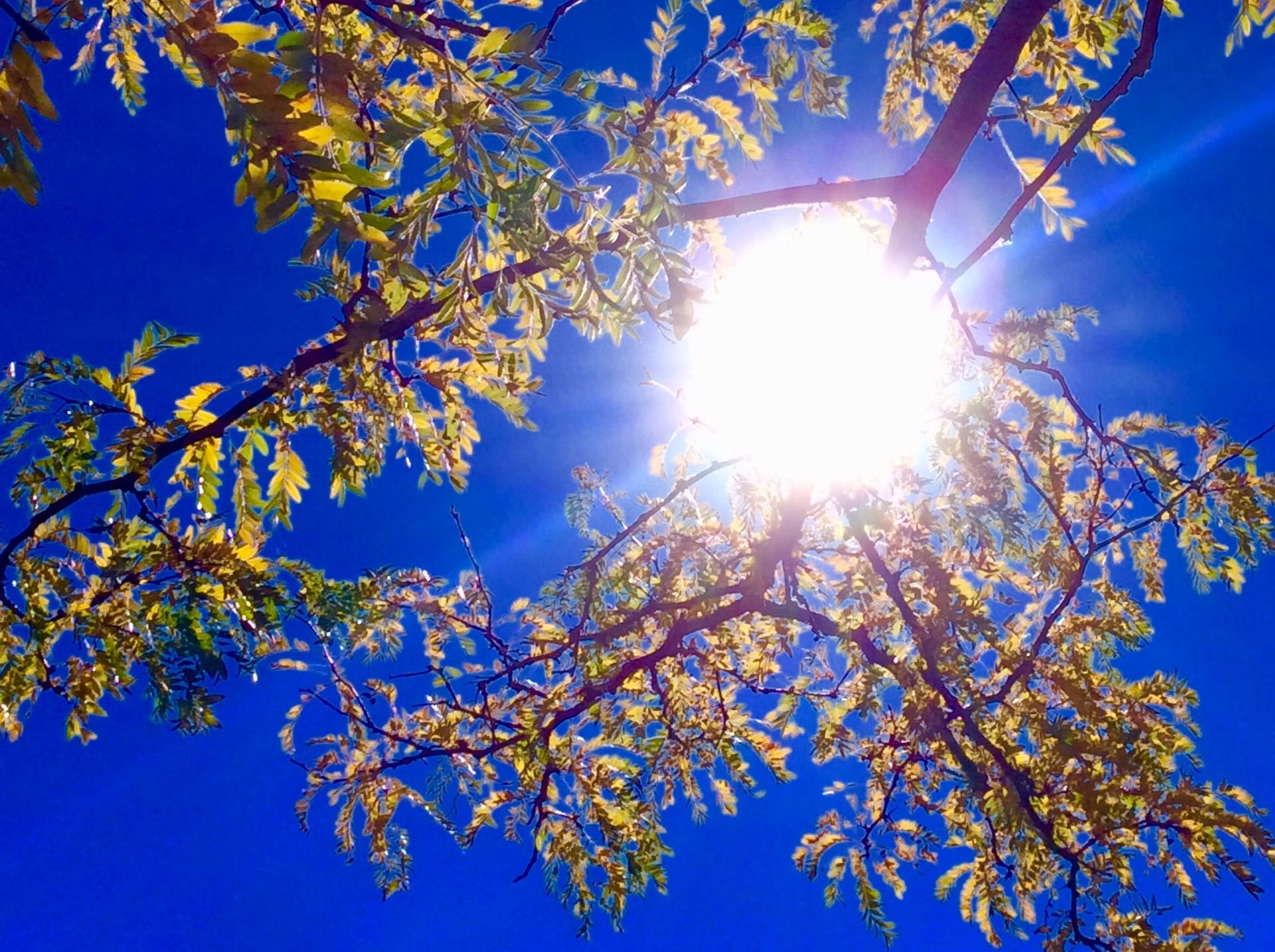 Autumn foliage  | drazpet, background, blue sky, branch