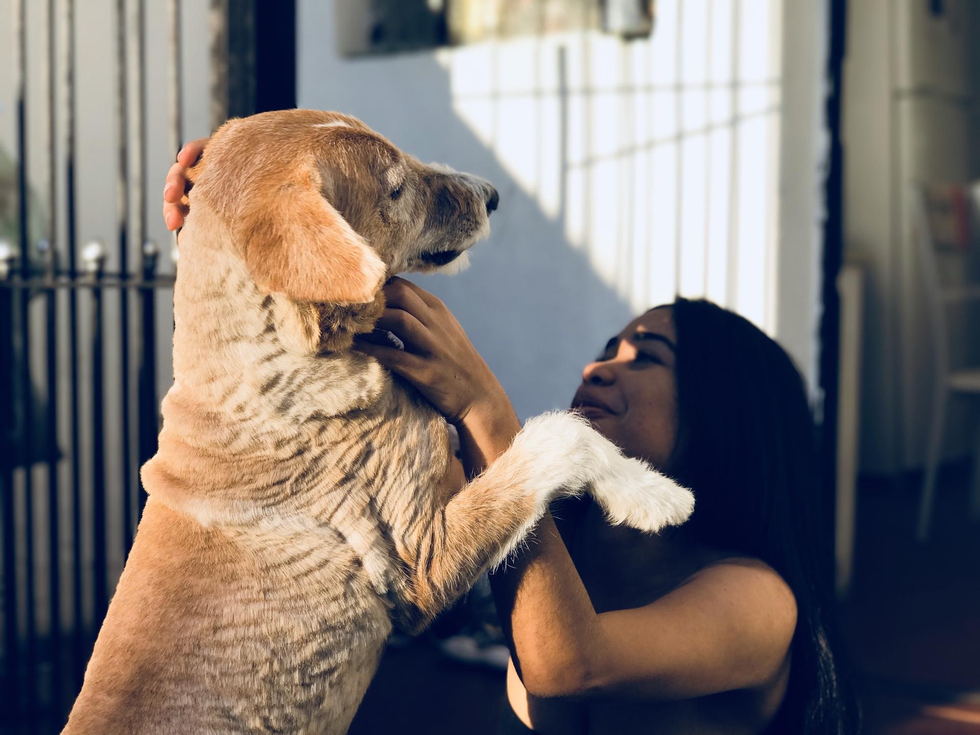 Love  | daylight, cute, animal, pet