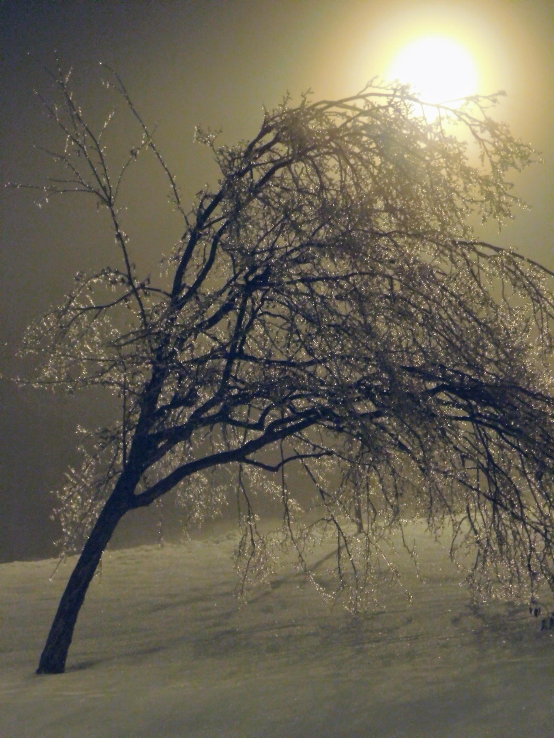 Froze tree leaning sideway | rick.cognyl.fournier, dawn, evening, fog
