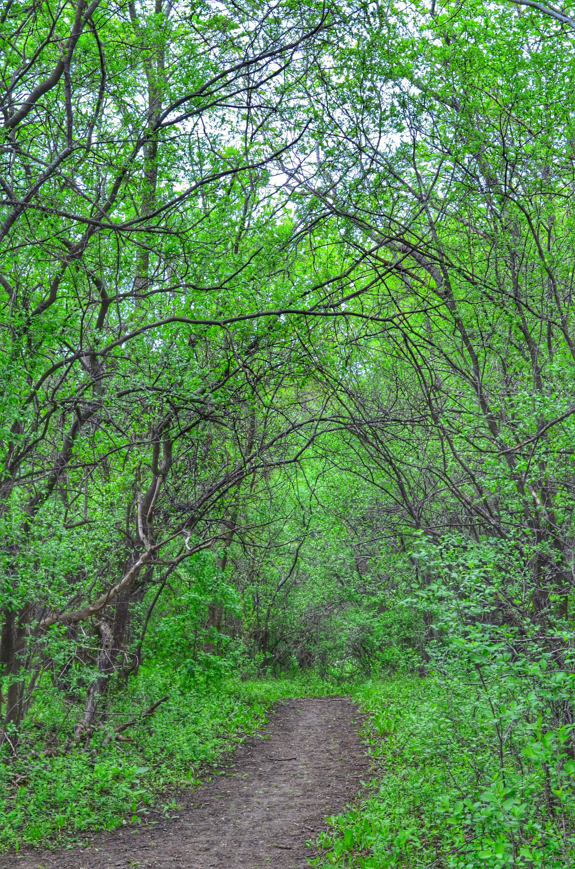 Footpath passing through forest | footpath, tree, branch, plant