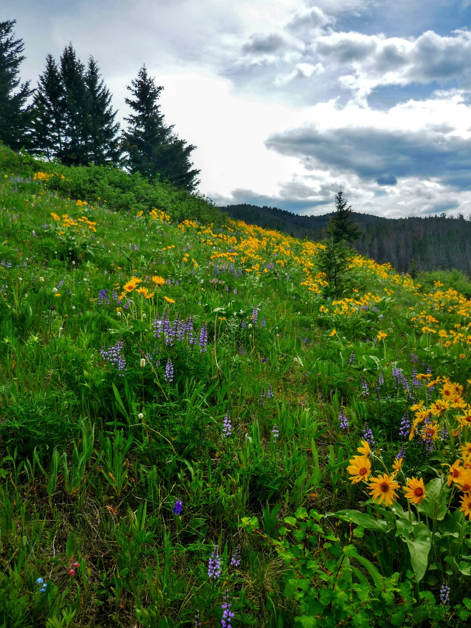 Wildflowers on hillside   nature, outdoors, photography, color image