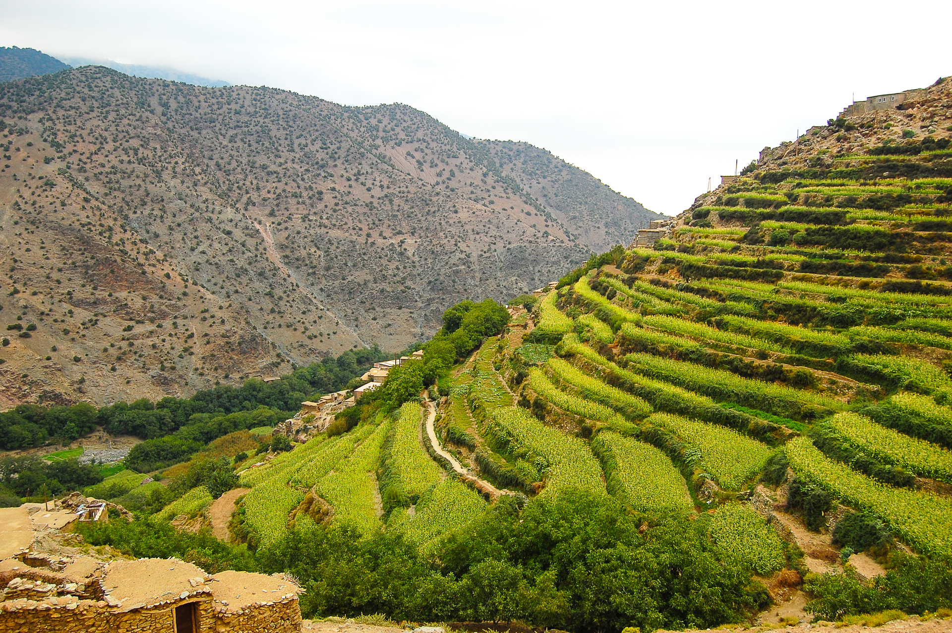 Terrace farming in morocco landscape during for Terrace cultivation