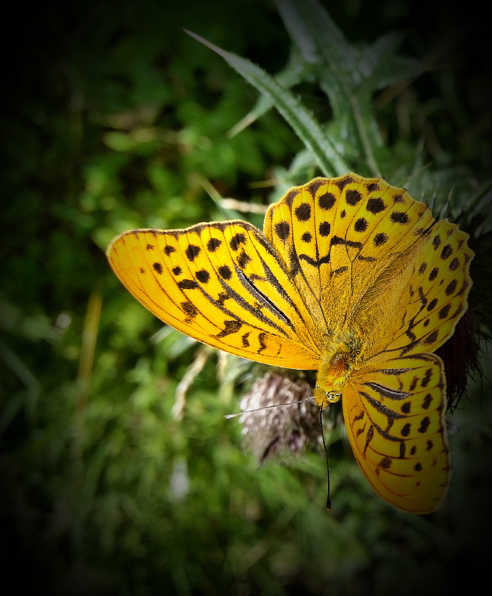 Yellow | estraub, butterfly, color, flora