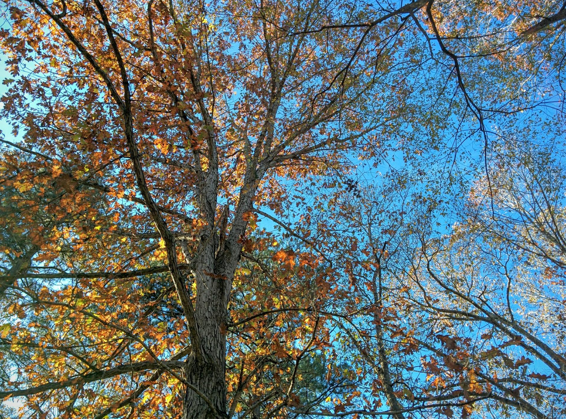 leaves and sky | jrcastine, autumn, foliage, scenic