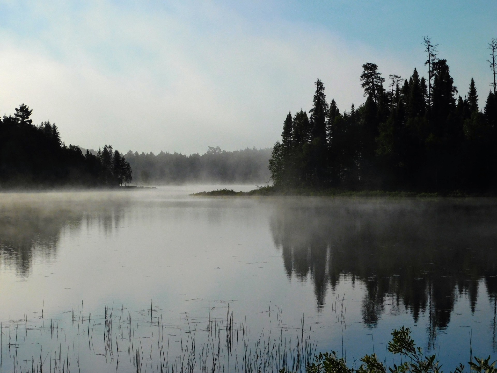 Foggy Morning | rick.cognyl.fournier, daylight, evergreen, lake