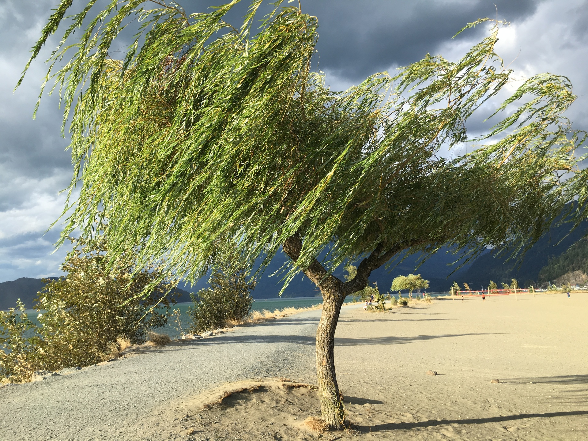Single tree on landscape | wind, single, motion, lakeshore