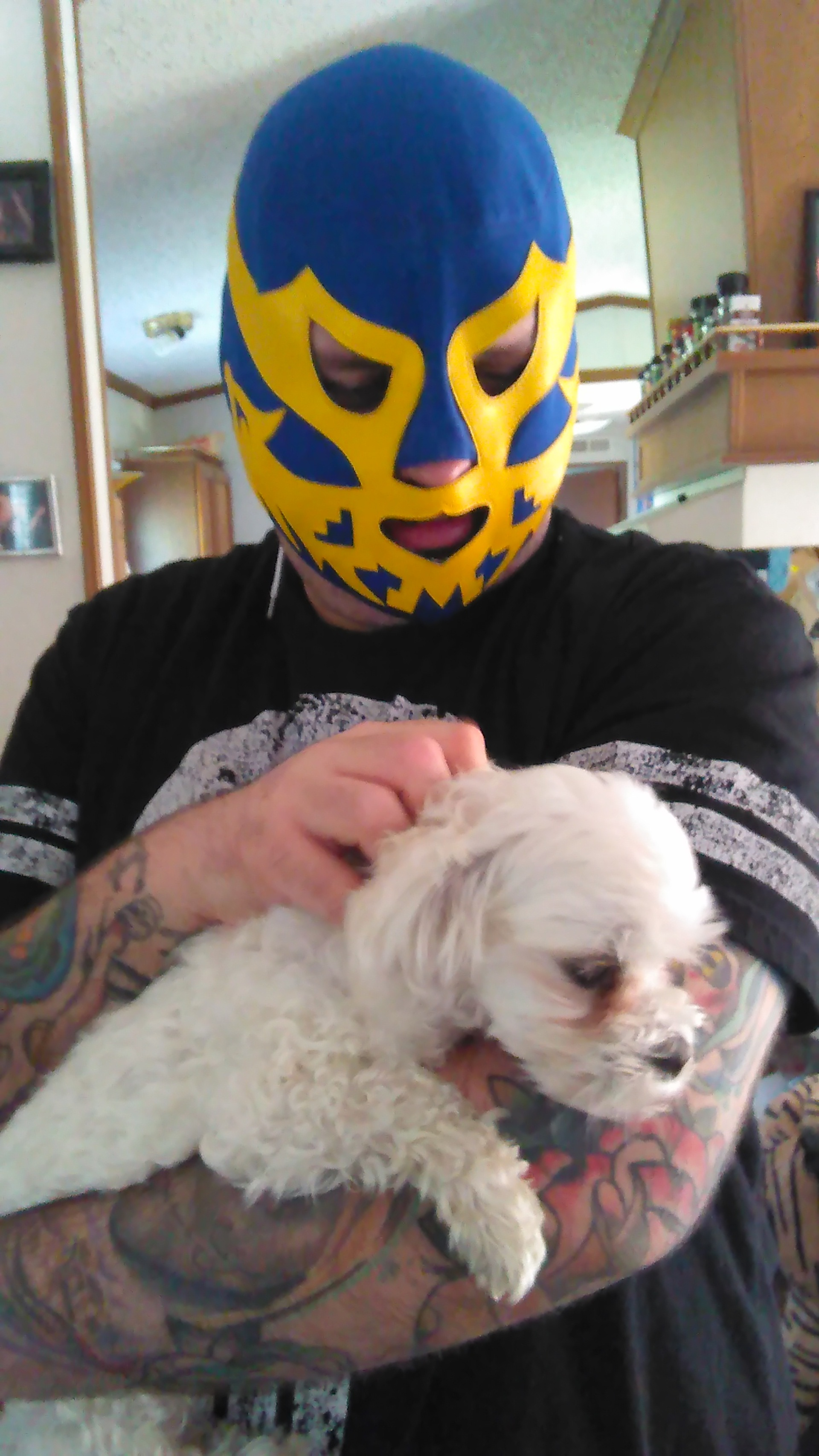 The Luchador and the Maltese