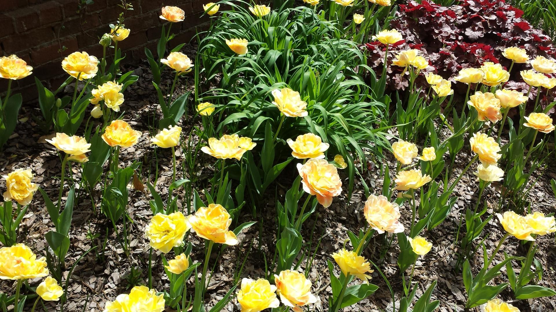 Nature, Flower, Garden, Flora, Floral
