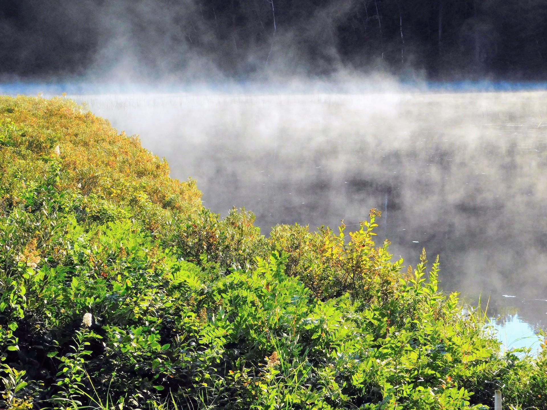 Foggy Morning | rick.cognyl.fournier, daylight, environment, fog
