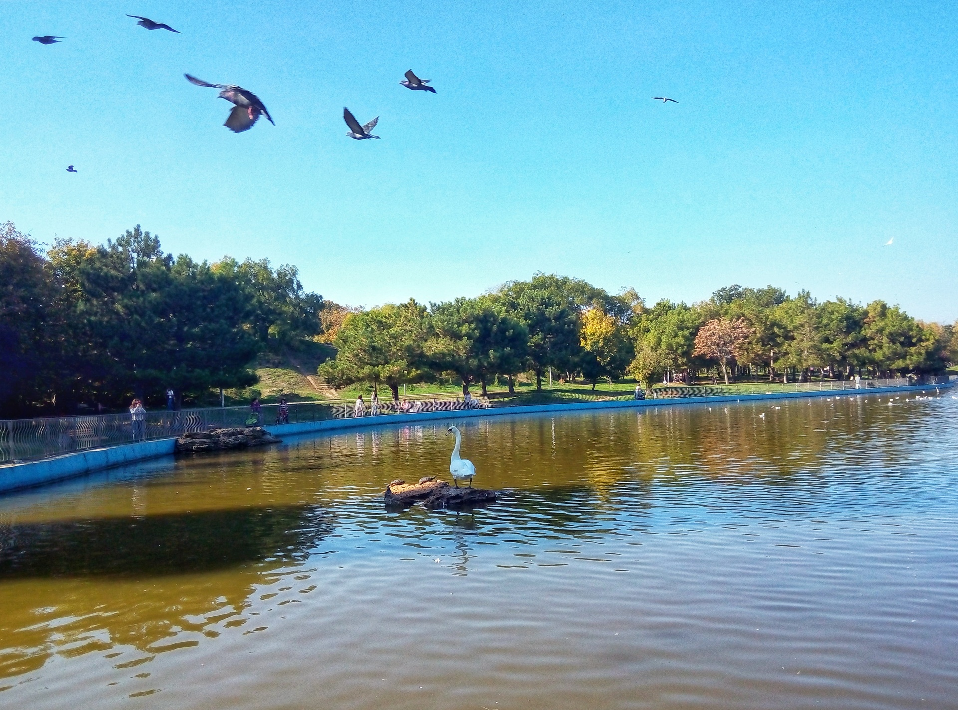 swan on the lake лебедь на озере