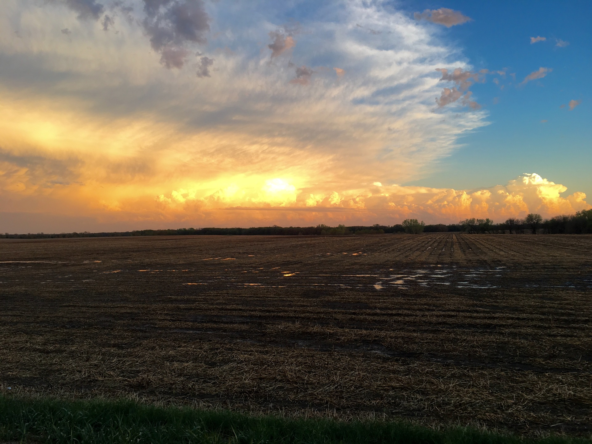 View of a field during sunset
