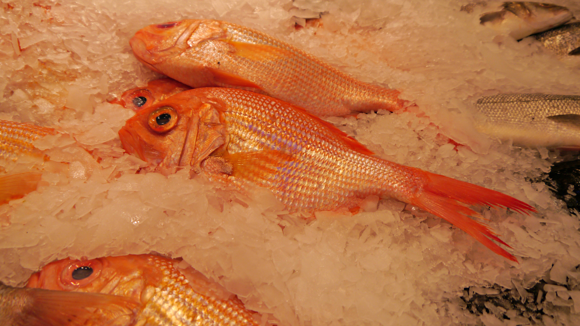 Red Snapper on Ice. Pike Place Market