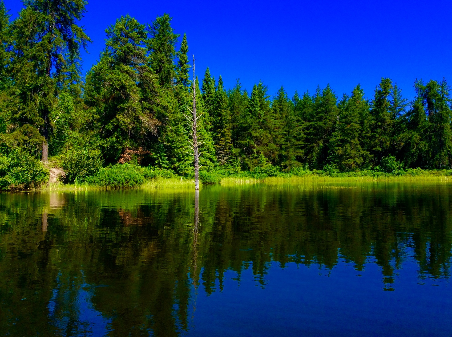 Trees reflecting on the lake