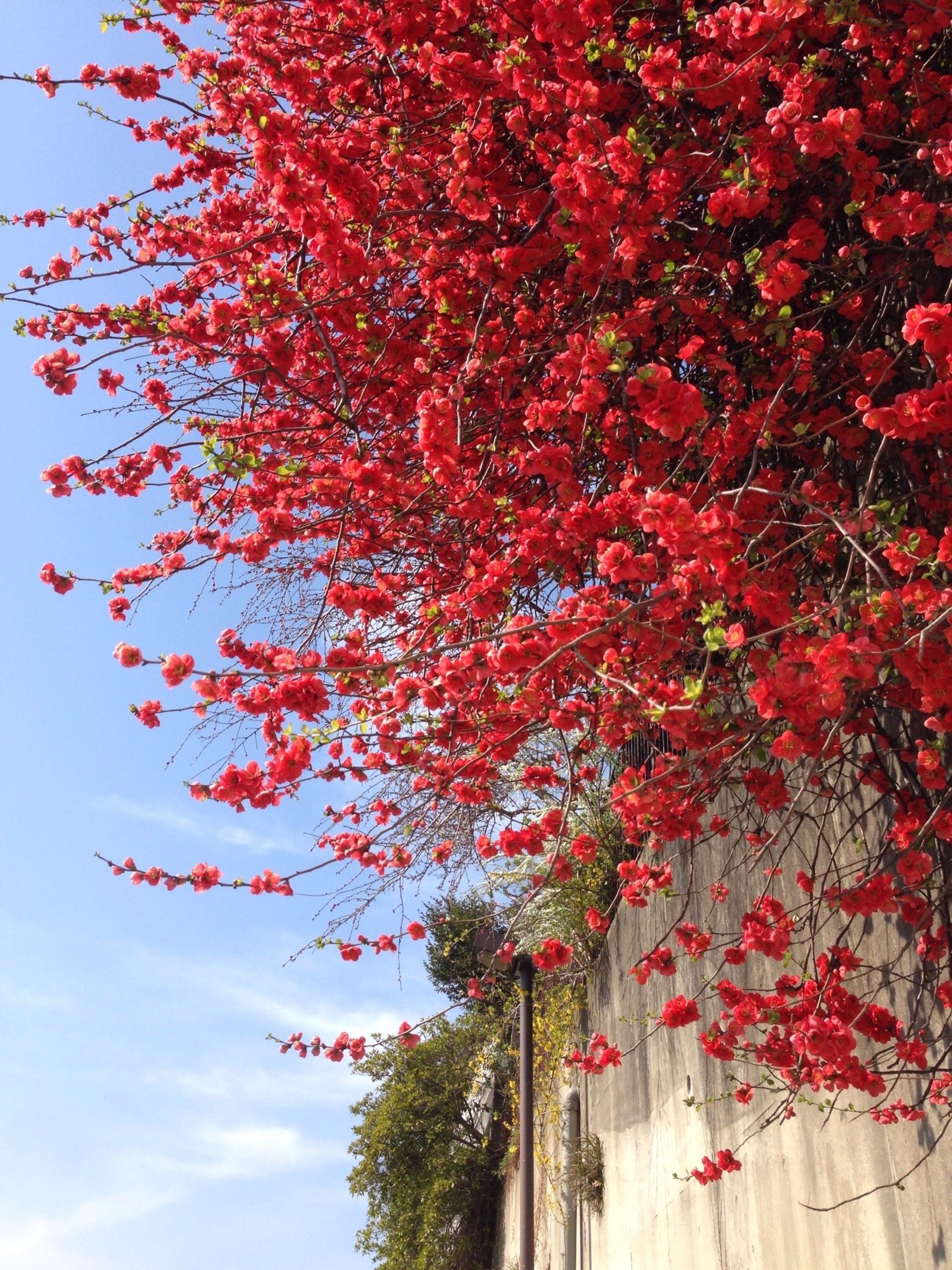 in full bloom | gato.gordi, color, garden, landscape