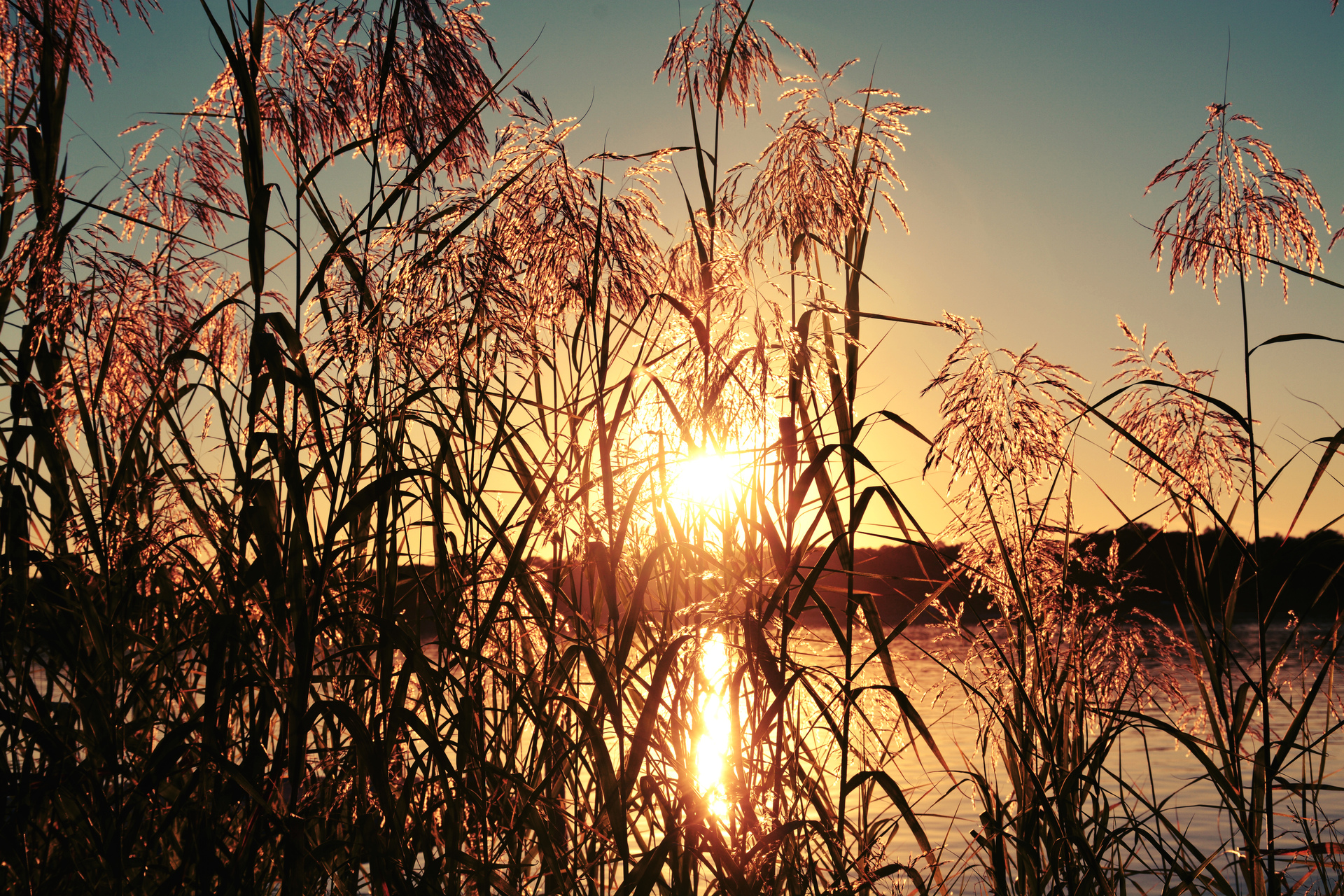 Captivating Illuminating Sunrays!  It is a dazzle with splendor and a soul-swelling experience to capture brilliant sunrays! Between the gaps of the tall grasses, lances of molten gold beams splash through the atmosphere and onto the earth!