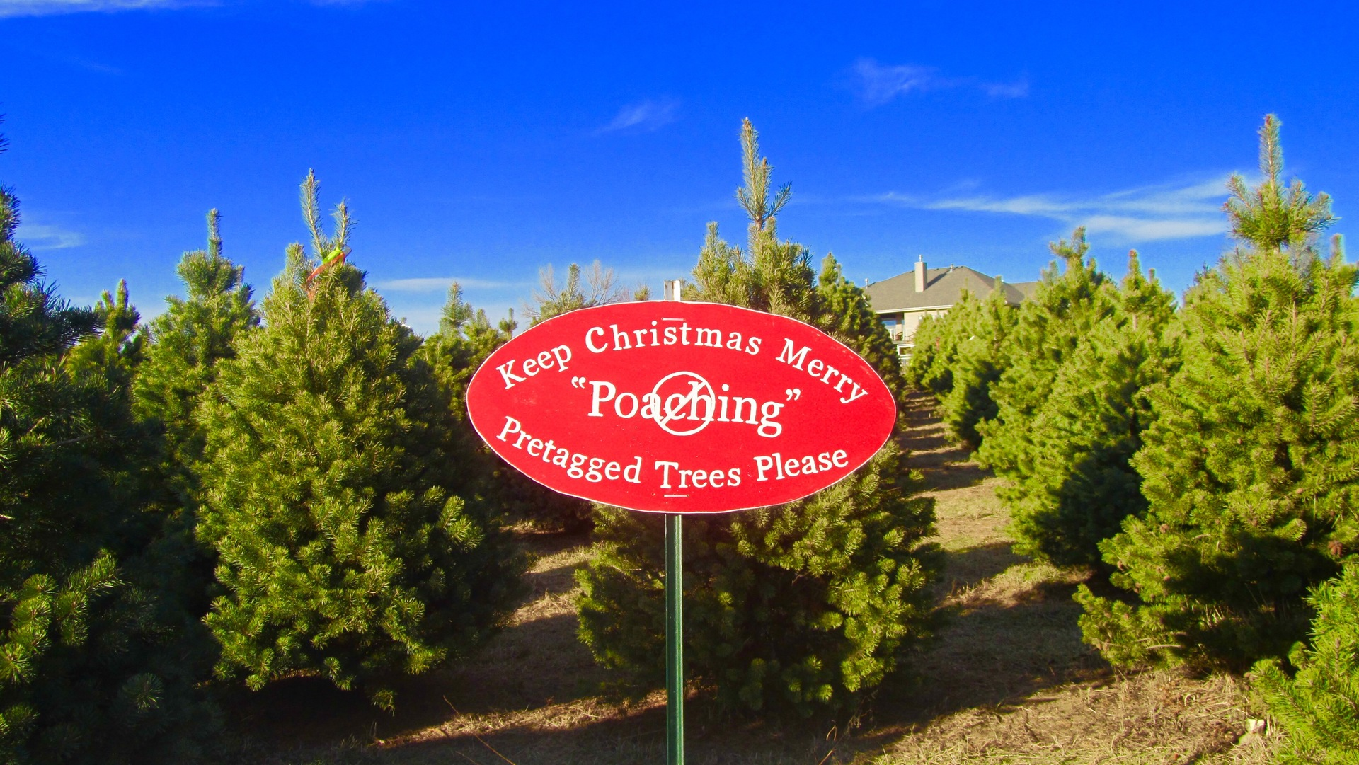 Red Color Story | tree, sky, sign, road