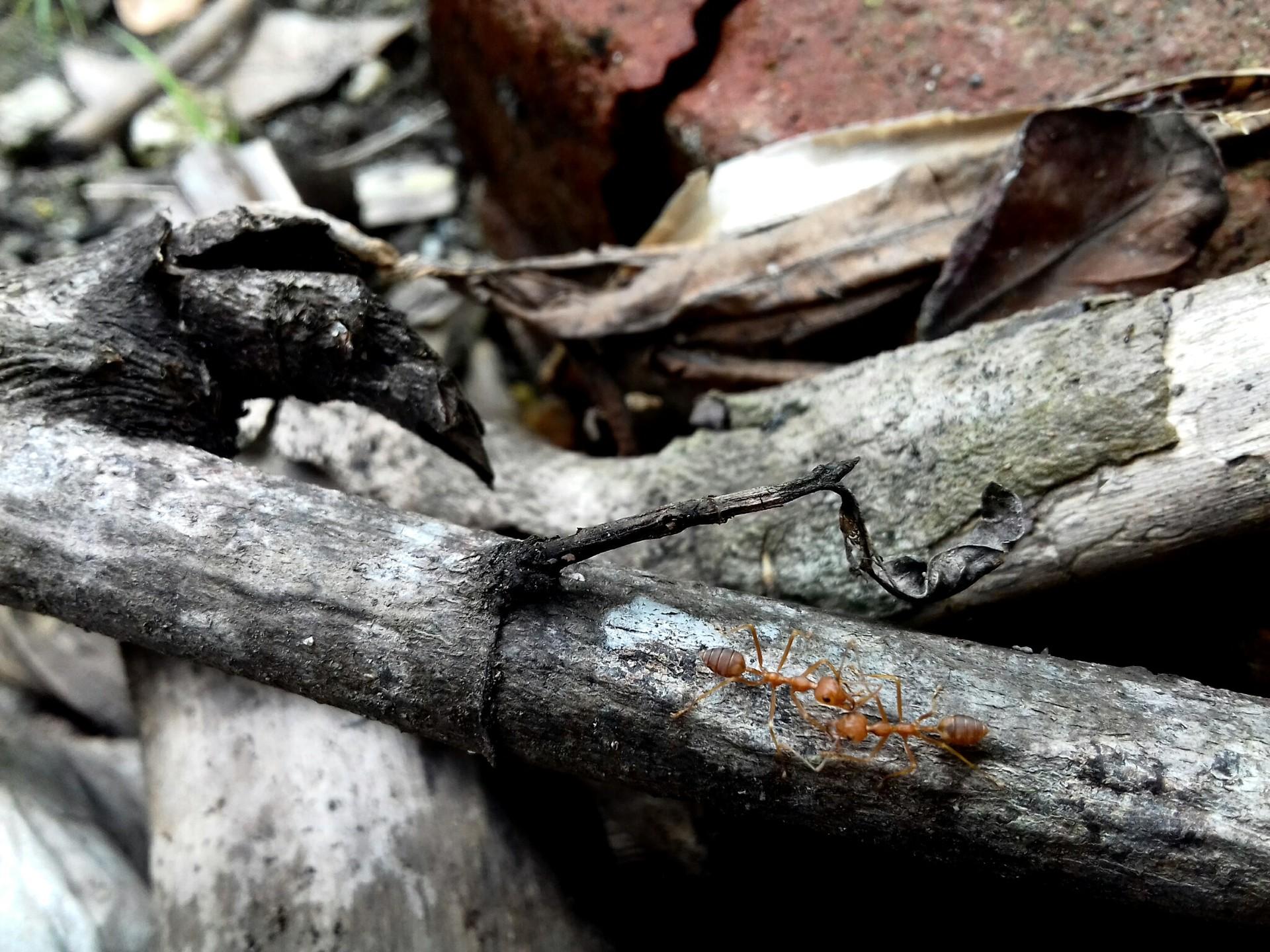 ants | sony_jr, nature, tree, tree log