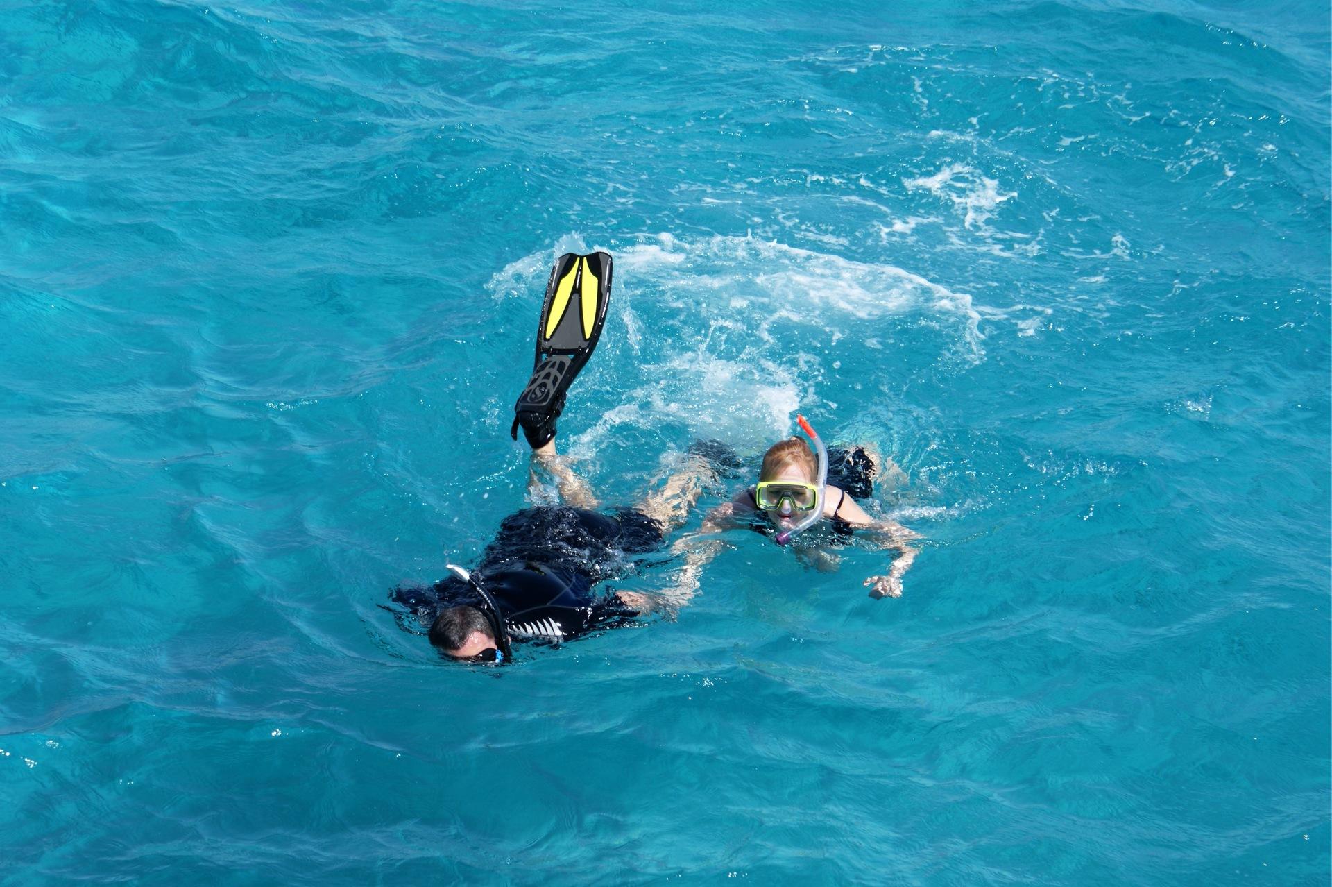 Swim | adinam1, action, cetacean, diver