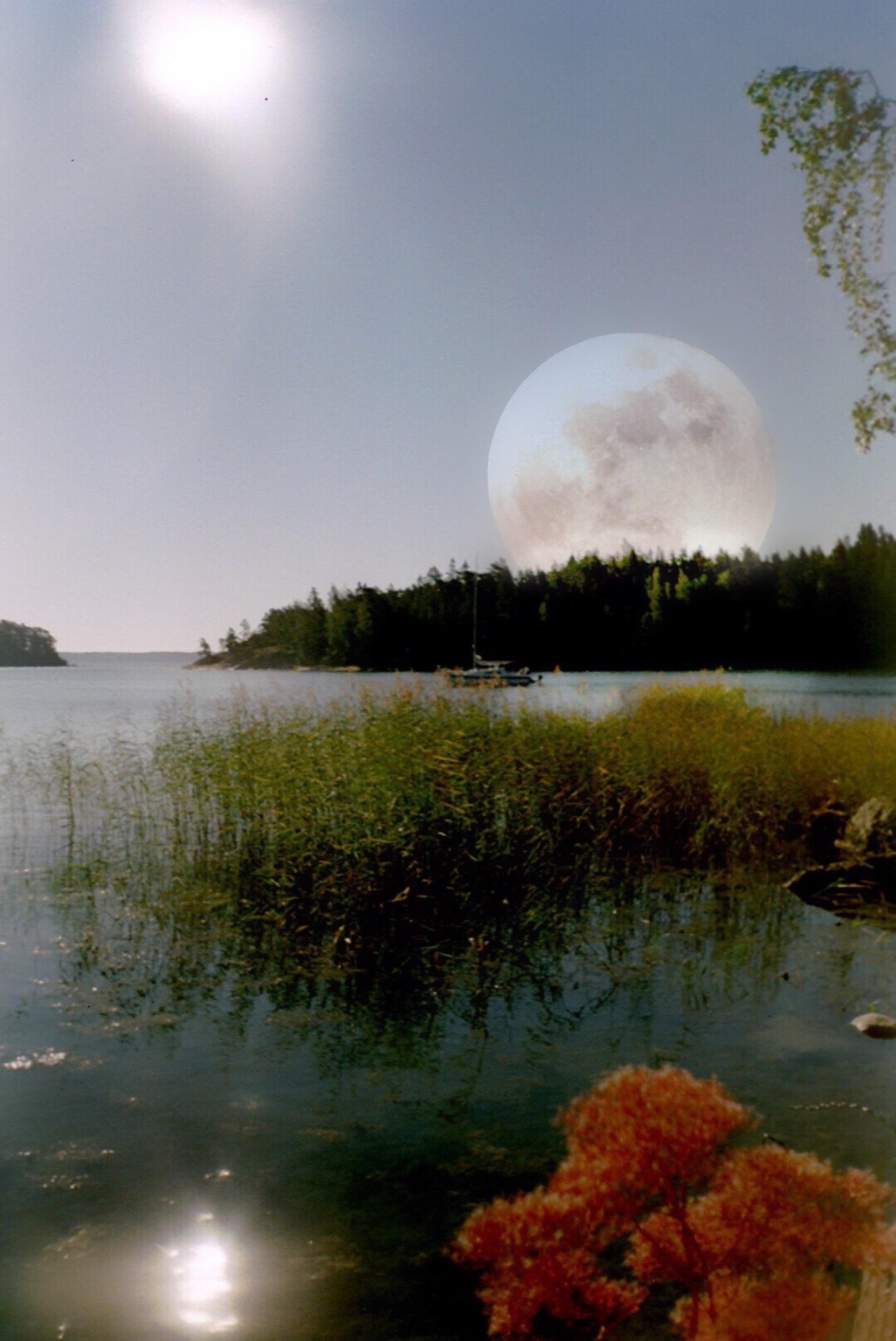 Edited landscape  | tiinger, daytime, morning, nature