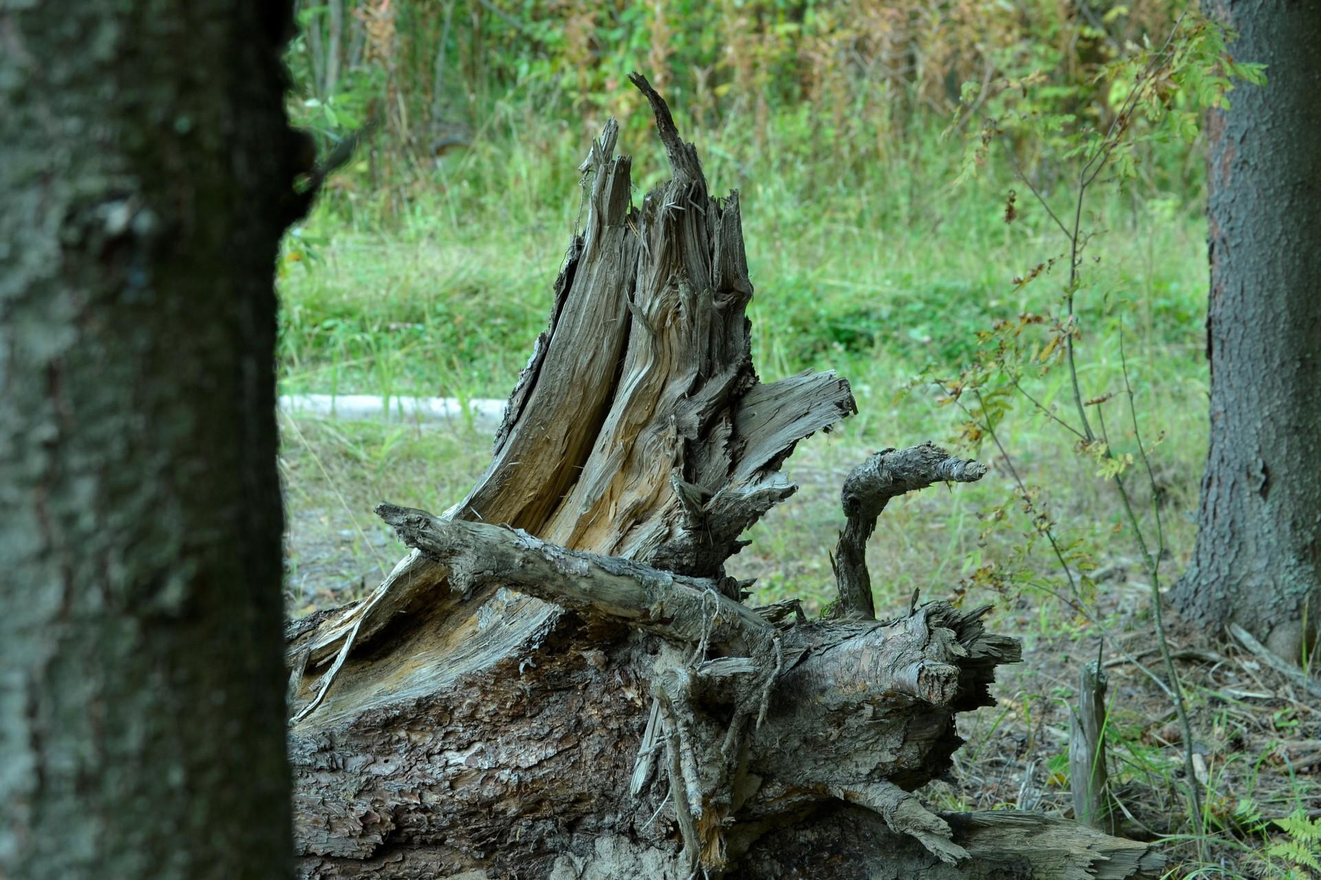 forest   vasili.danilov, travel, old, grass