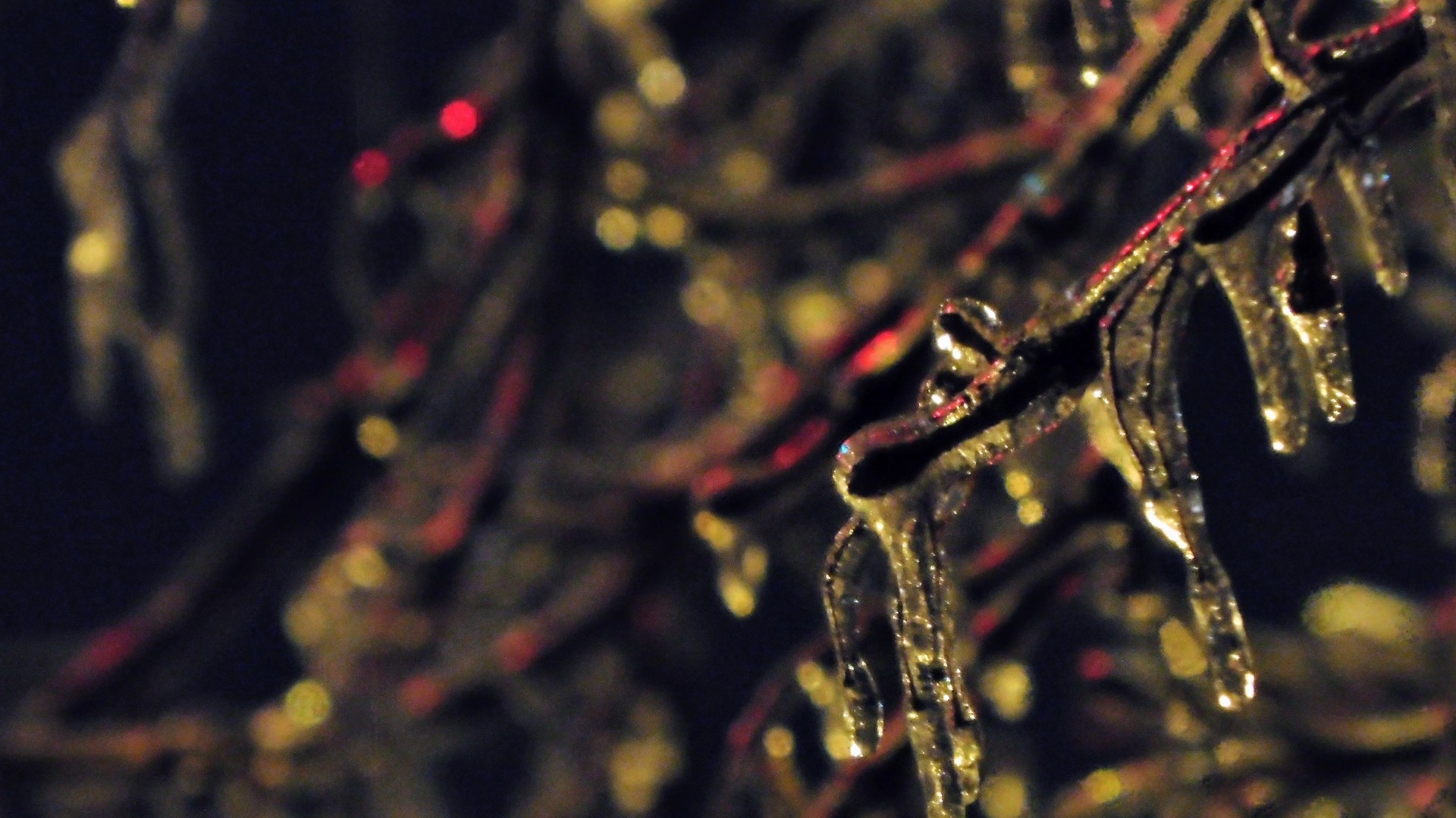 Frozen branch, ice storm | rick.cognyl.fournier, abstract, blur, close-up