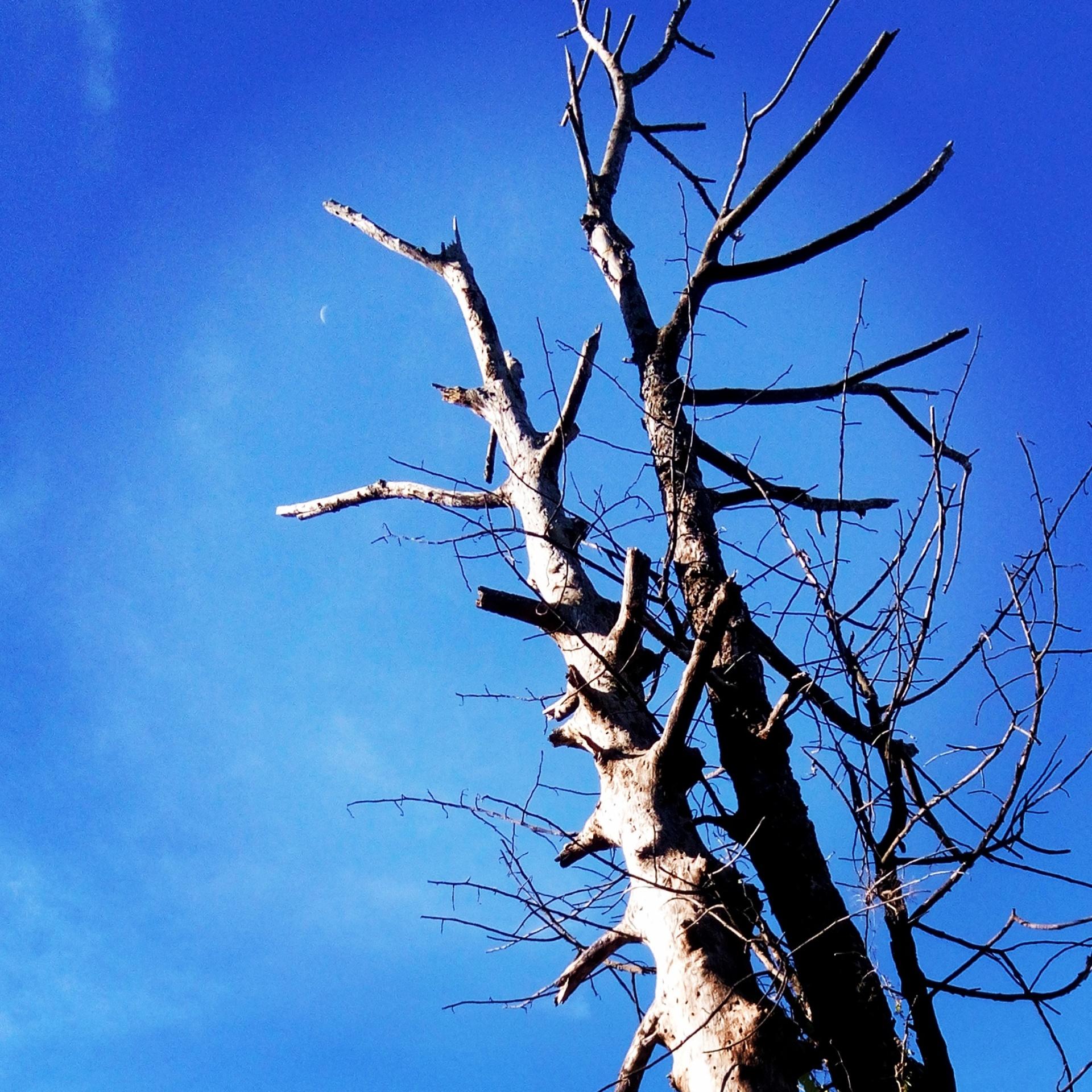 John 15:5,6 | mheljun2017, tree, no person, wood