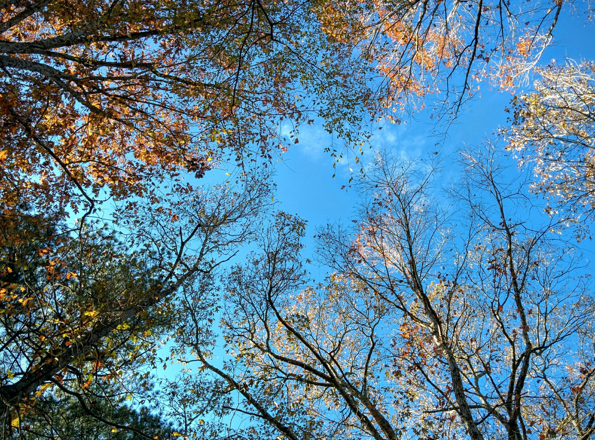 forest canopy | jrcastine, sky, autumn, nature