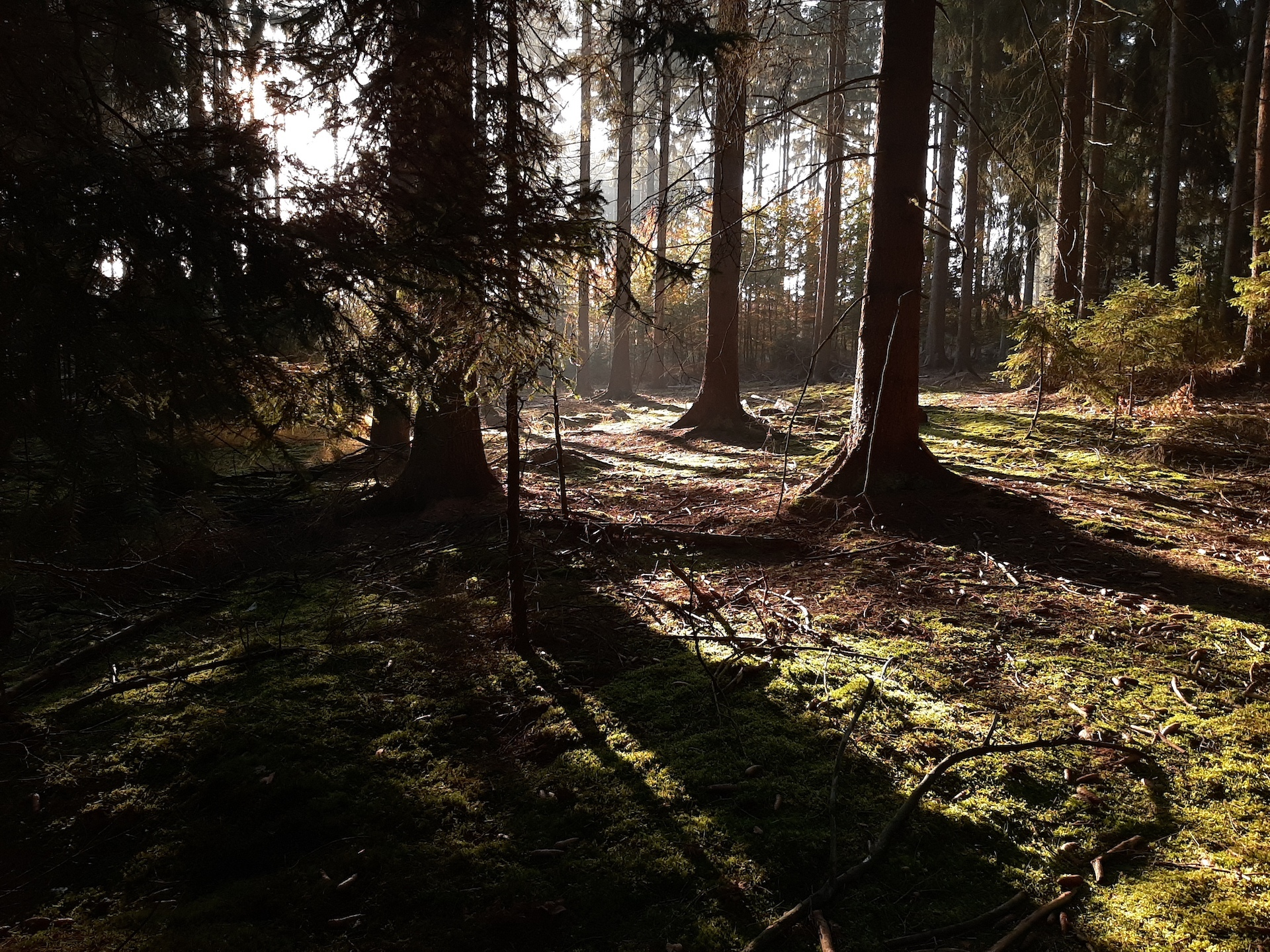 Beautiful Forest Straight from Google Photos example photo