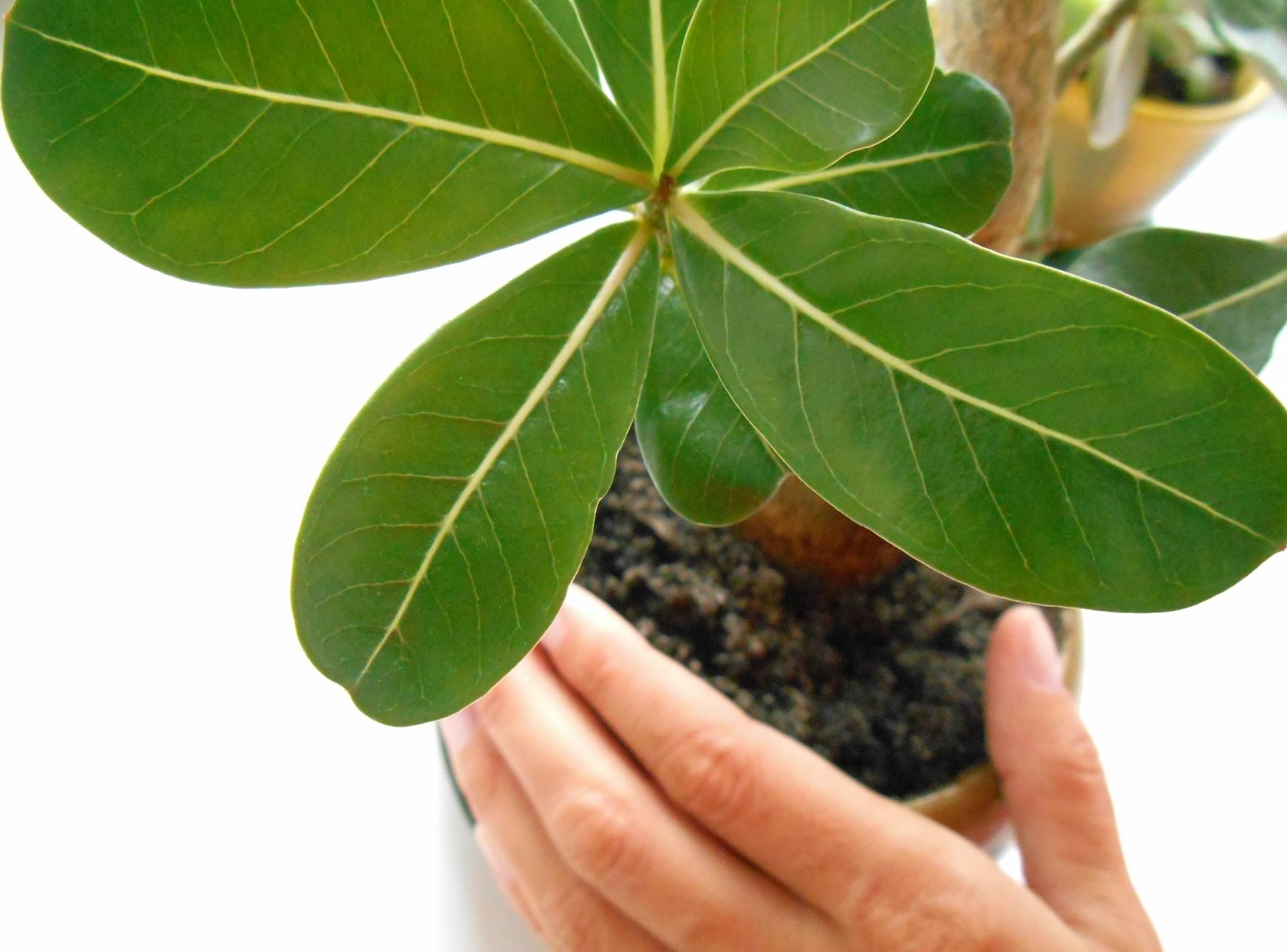 Plants around us example photo