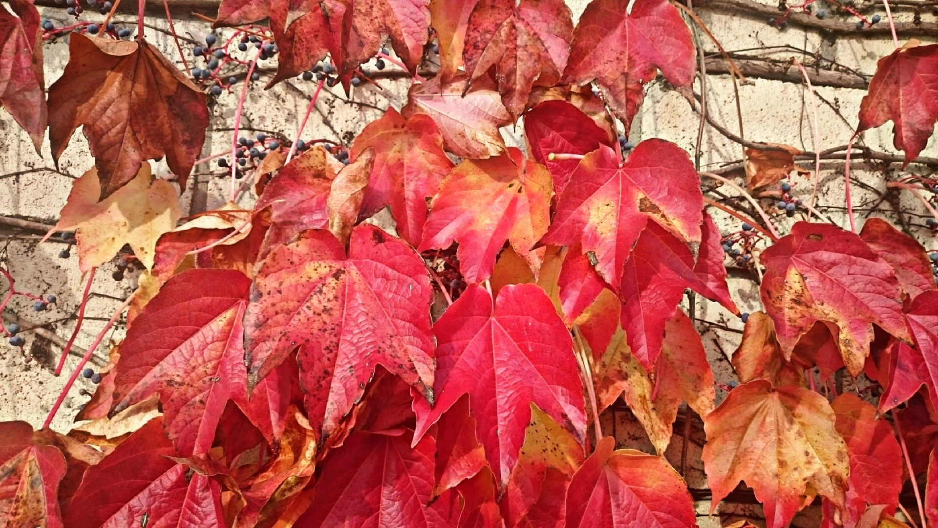 First signs of autumn example photo